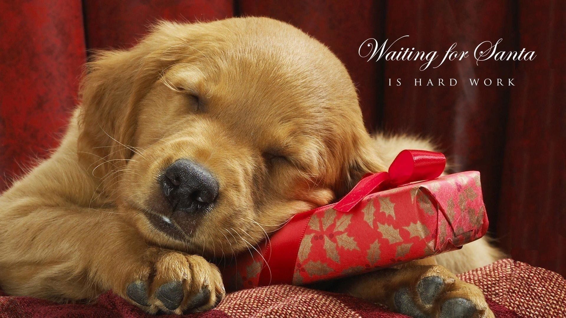 Cute Puppy Christmas Wallpaper   Christmas HD Wallpapers