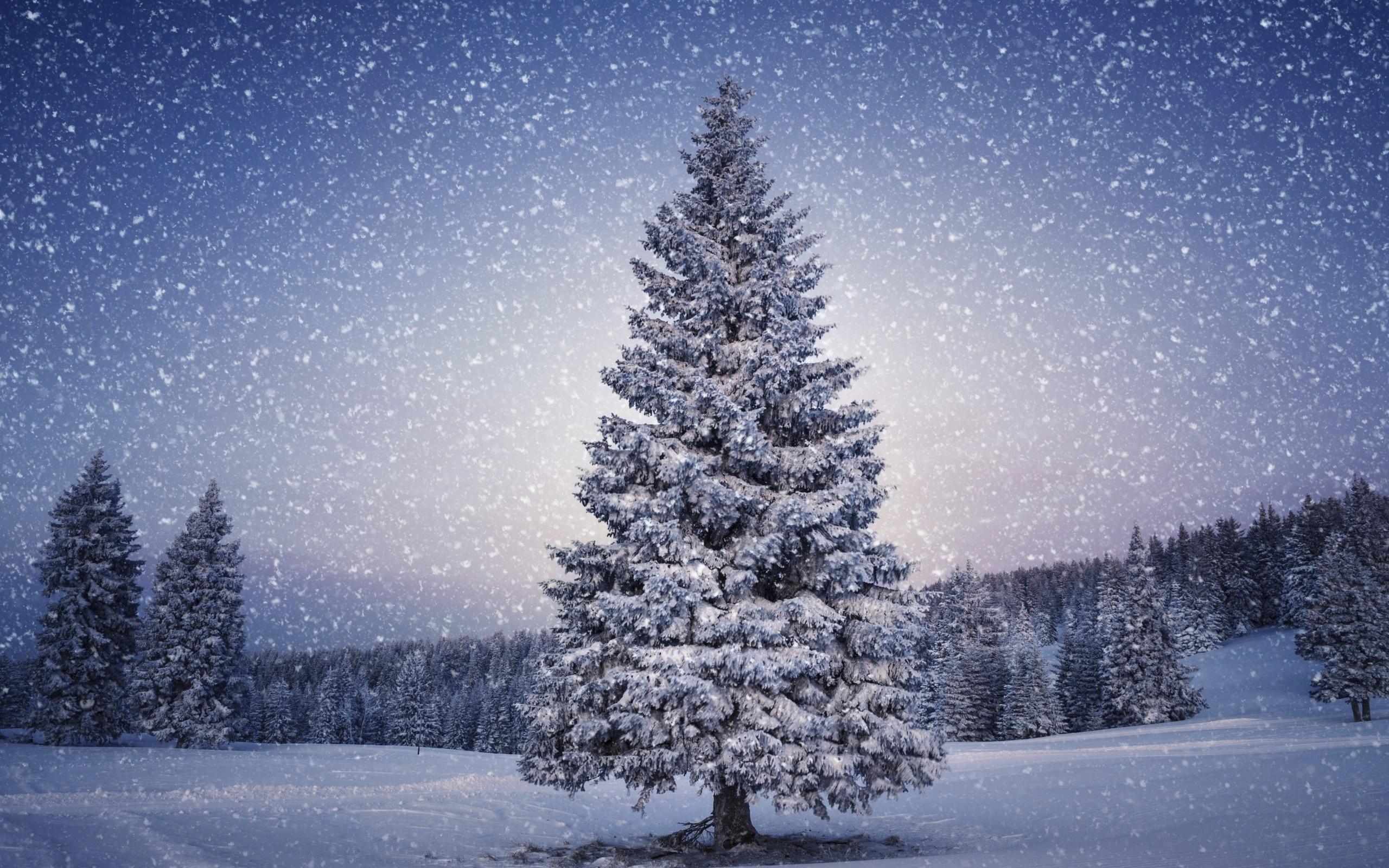 Snowy Christmas Tree HD Wallpaper