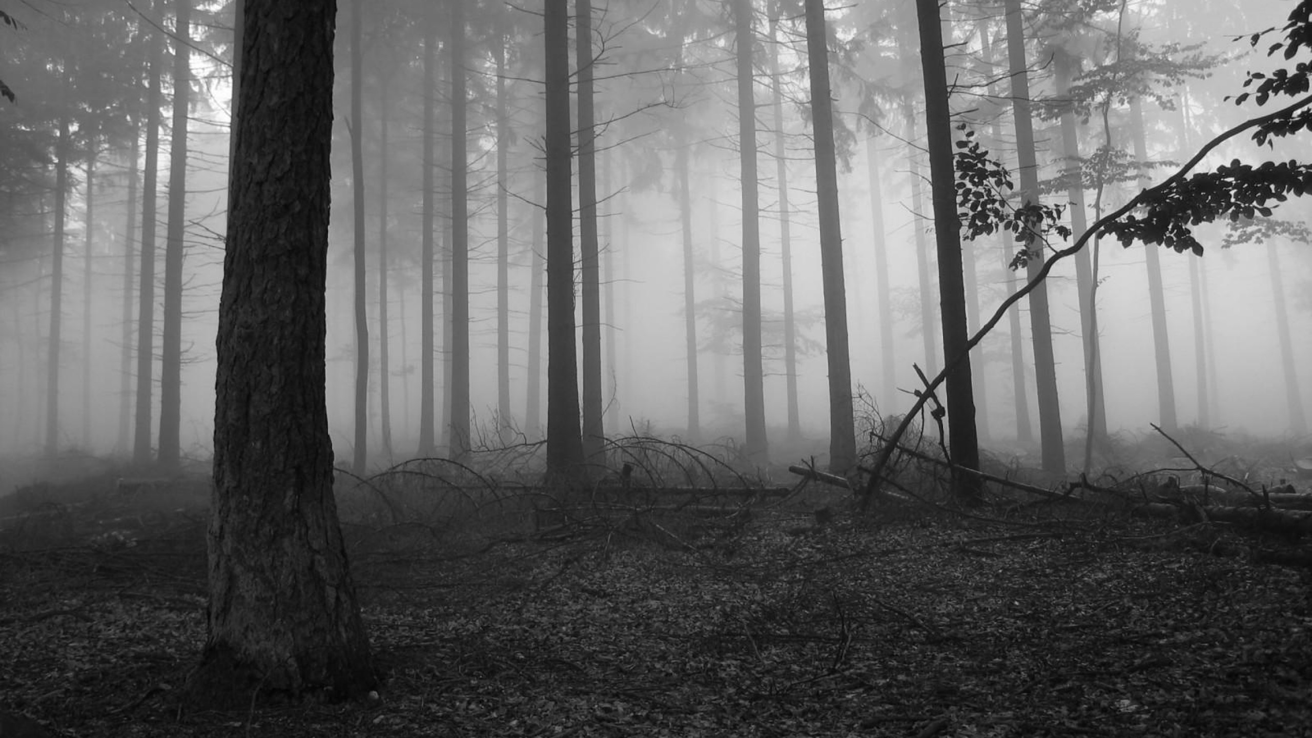 Fog in the dark forest Nature HD desktop wallpaper, Tree wallpaper, Forest  wallpaper, Fog wallpaper, Branch wallpaper – Nature no.