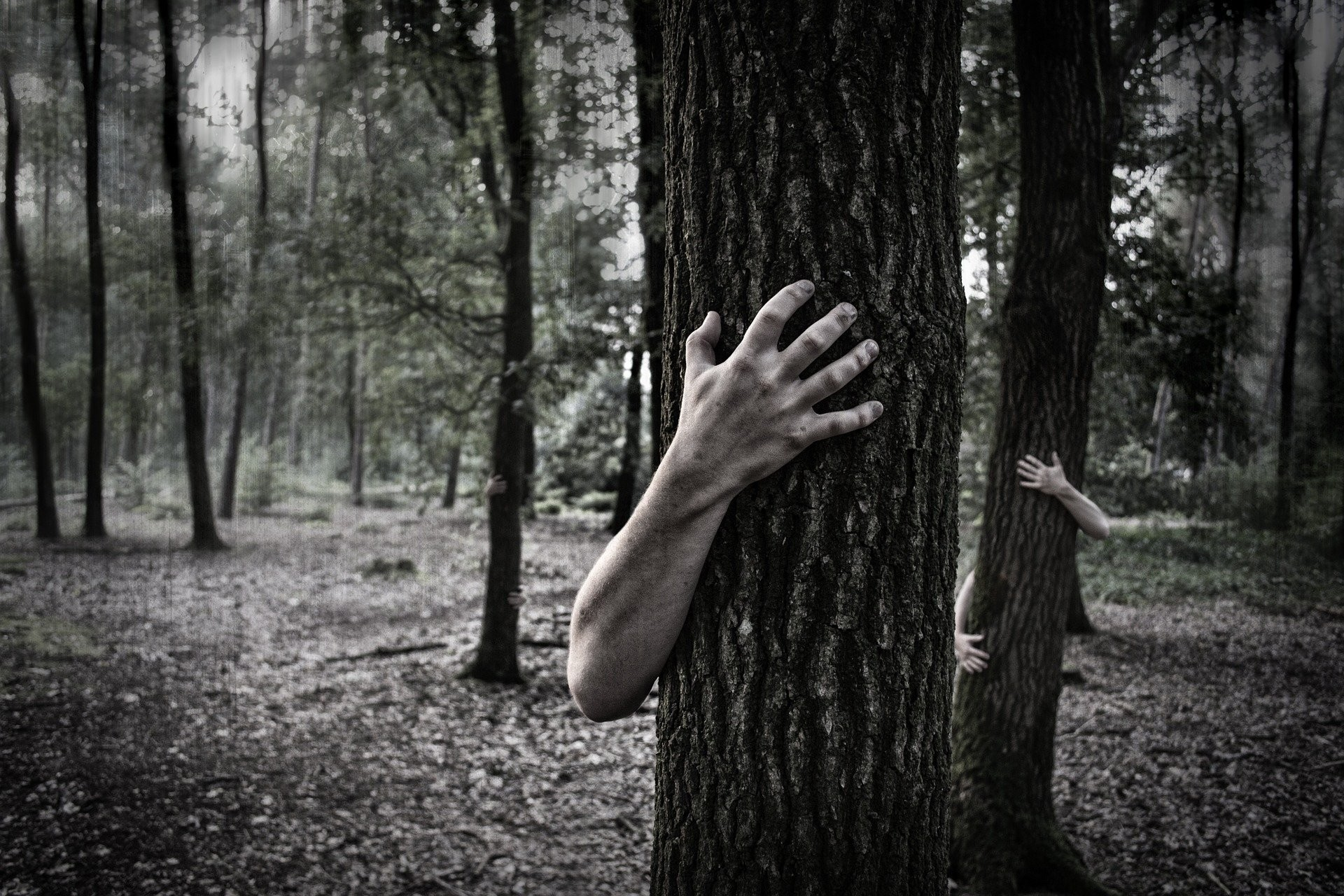 Hands Trunk Creepy Zombie Forest Horror Scary Forest Wallpaper At Dark  Wallpapers