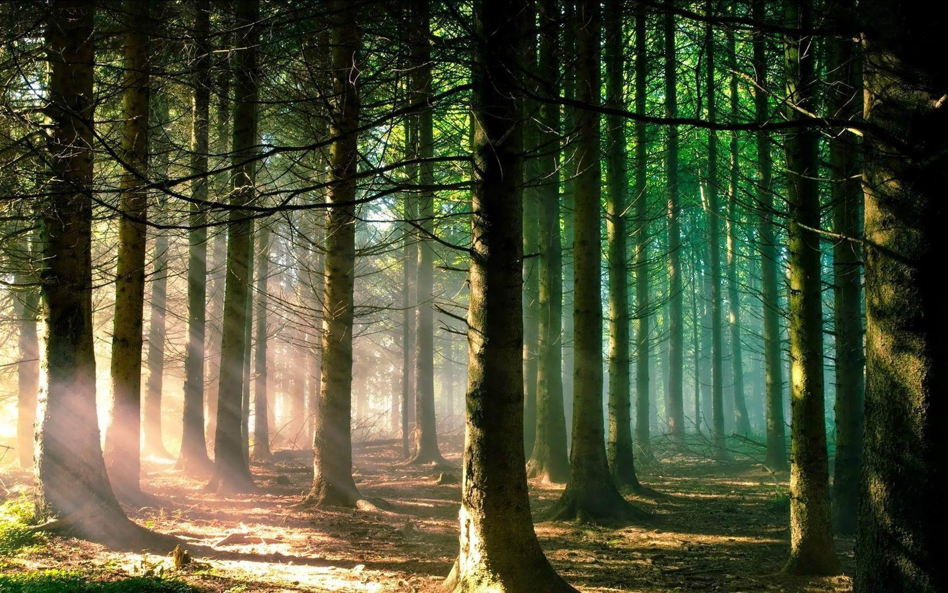 forest wallpaper dark scary. Â«Â«