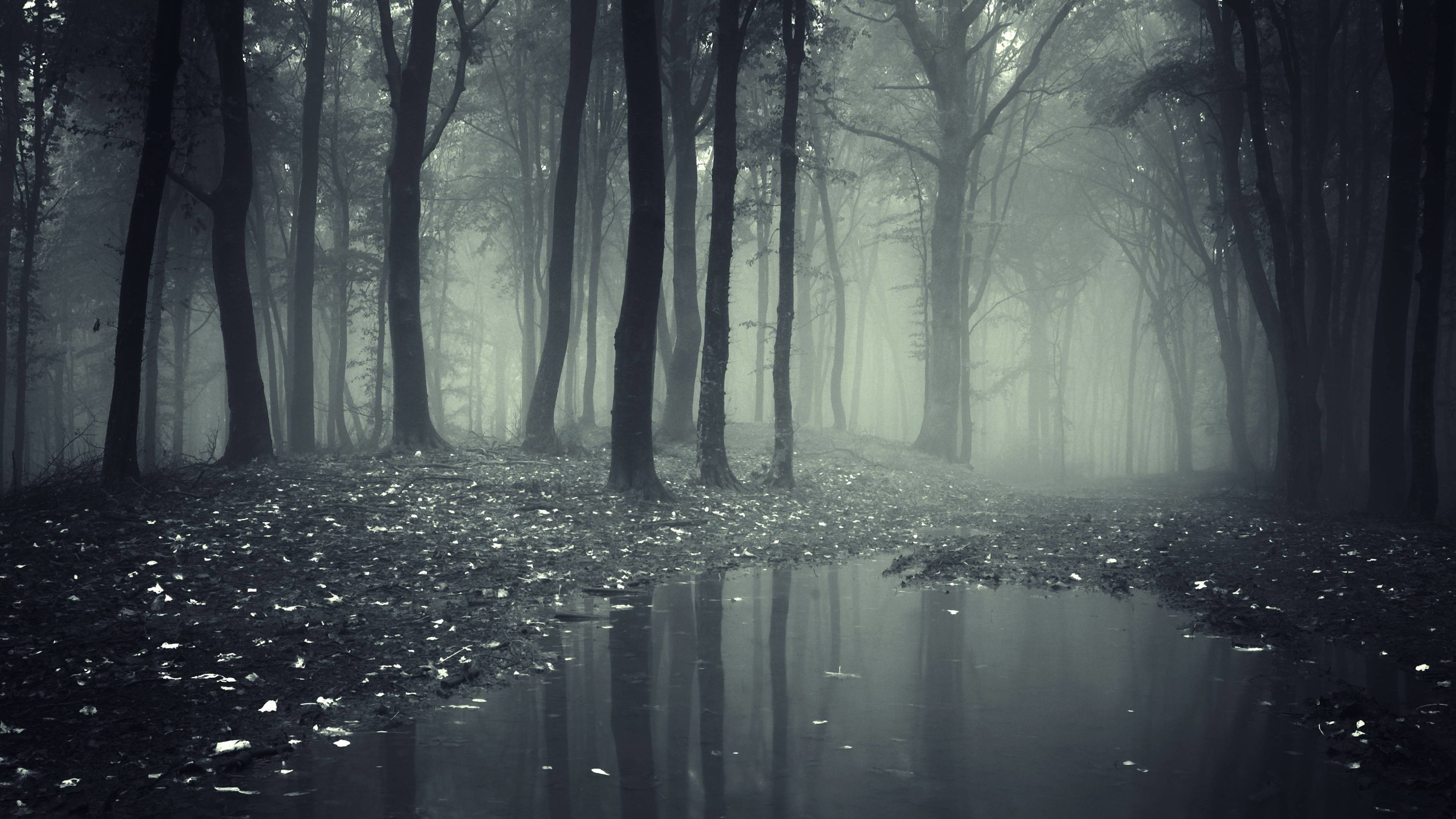Creepy Dark Forest HD Wallpapers – High Definition Wallpapers