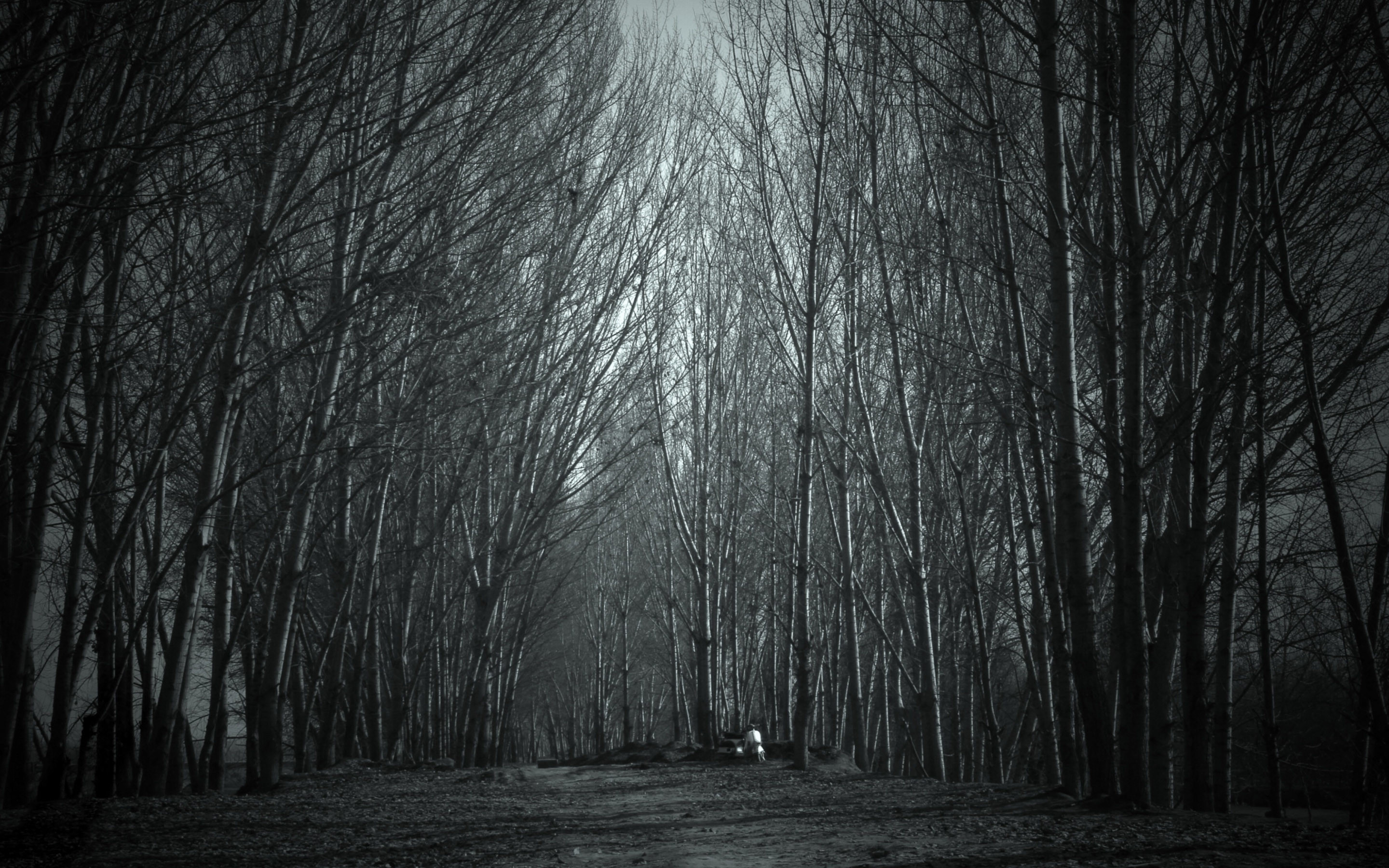 spooky forest | Haunted Forest wallpaper