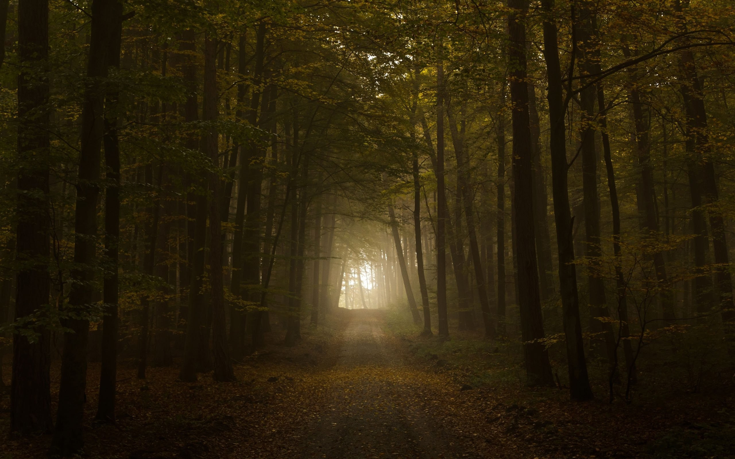 dream-wallpaper-wallpapers-spooky-creepy-forest-computer-horror.