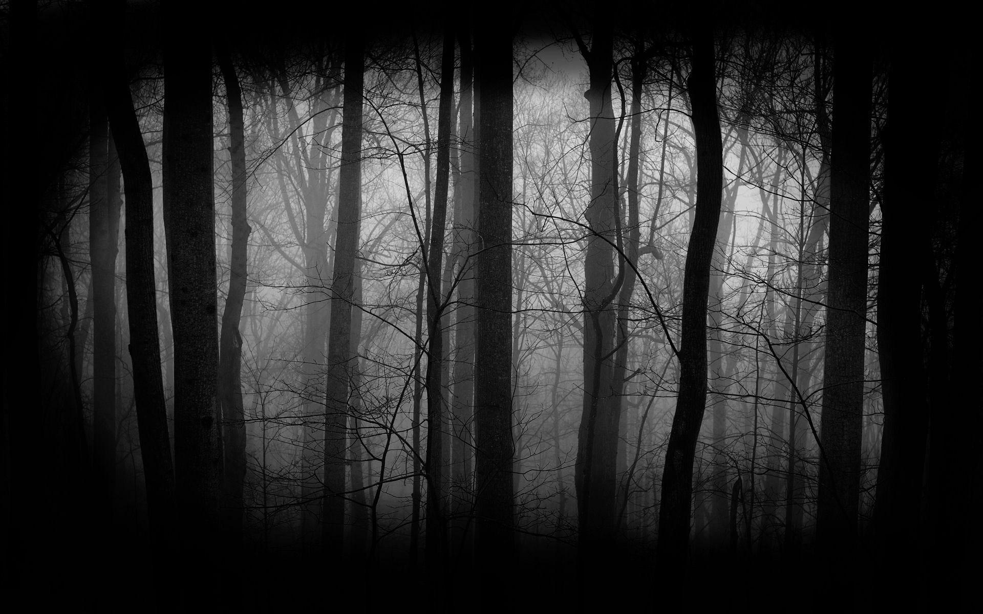 Dark Forest Wallpaper (3)