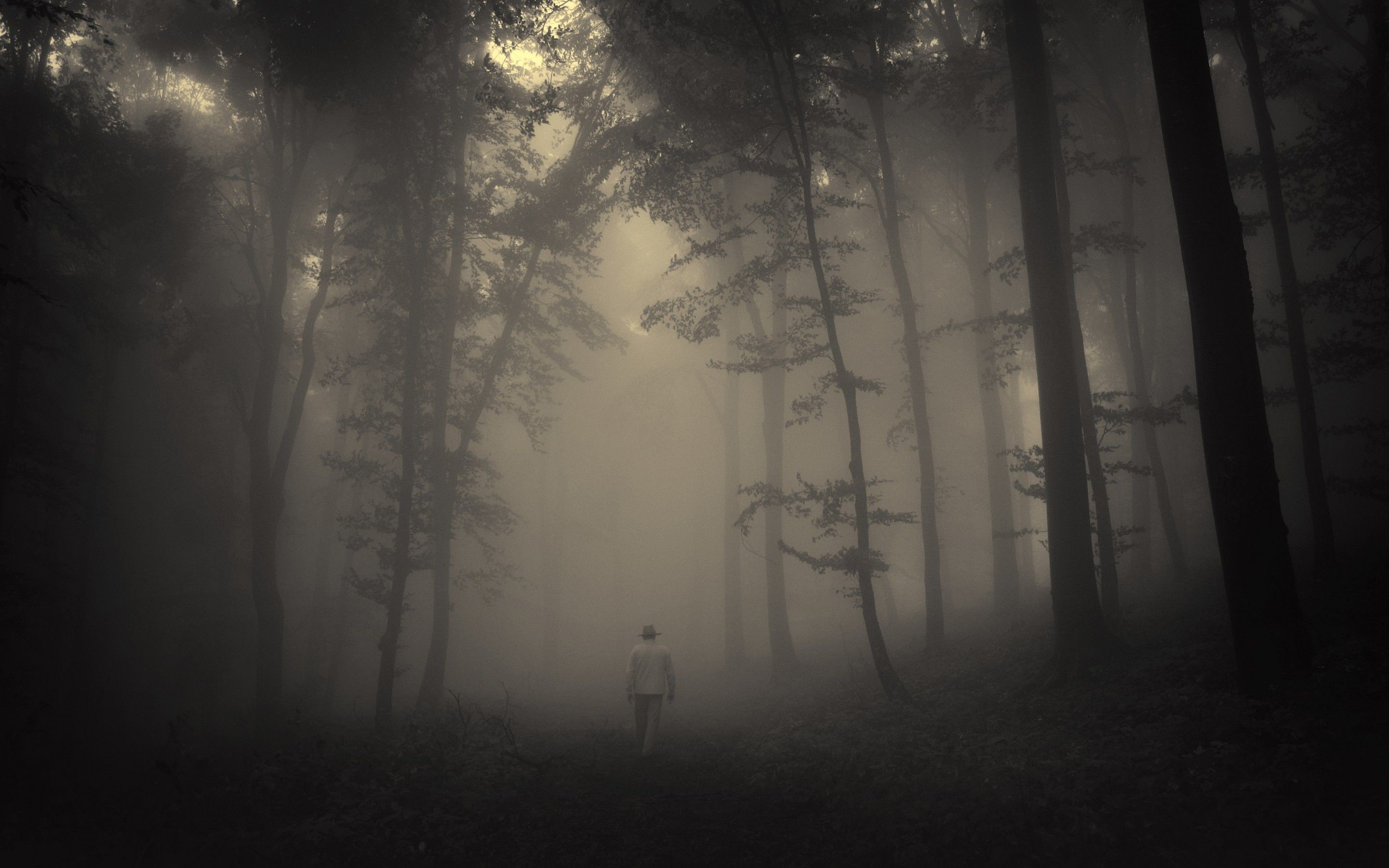 Download Creepy Forest Wallpaper For Windows #lxiua .