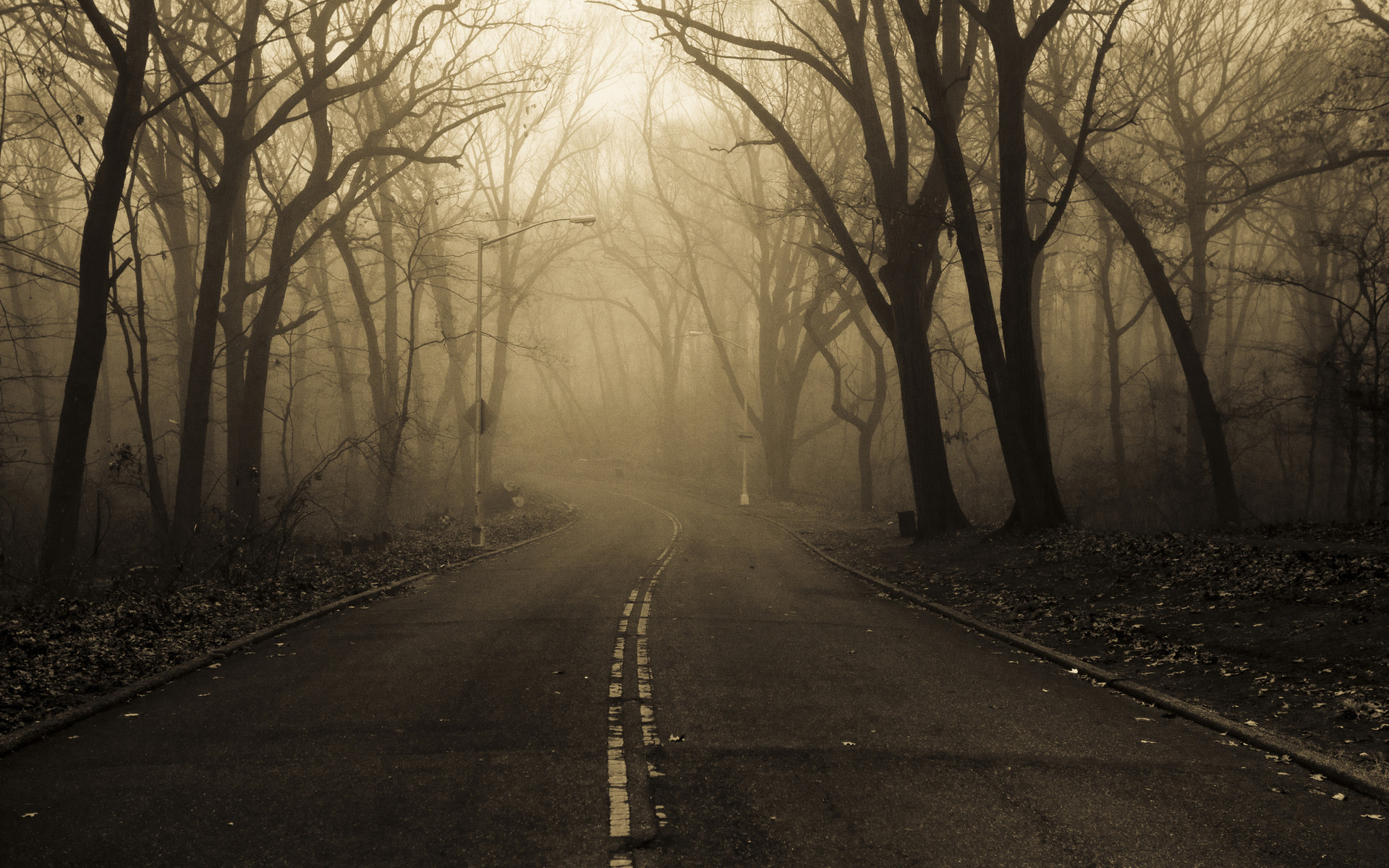 126 Creepy Forest