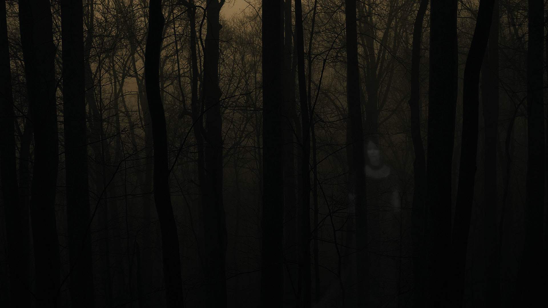 Spooky Forest Backgrounds – Festival Collections