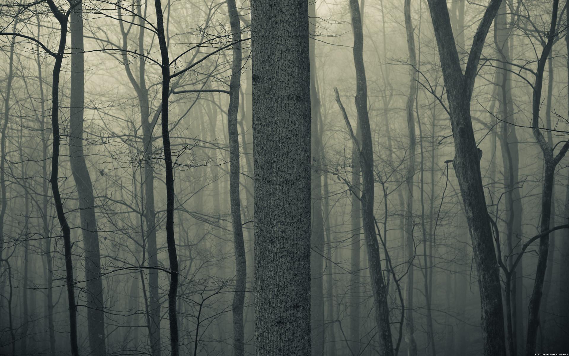 Nature trees forests woods trunk haze fog mist dark bark .