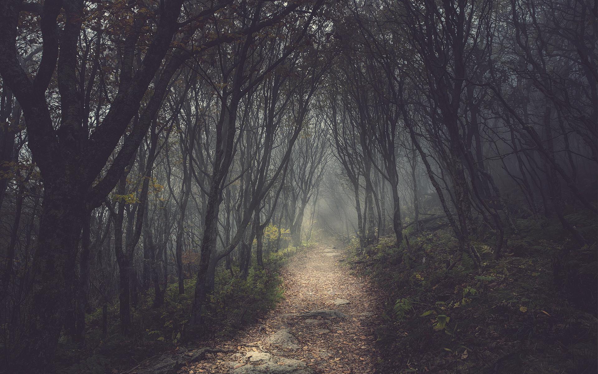 Trees forest path dark wallpaper | | 75113 | WallpaperUP