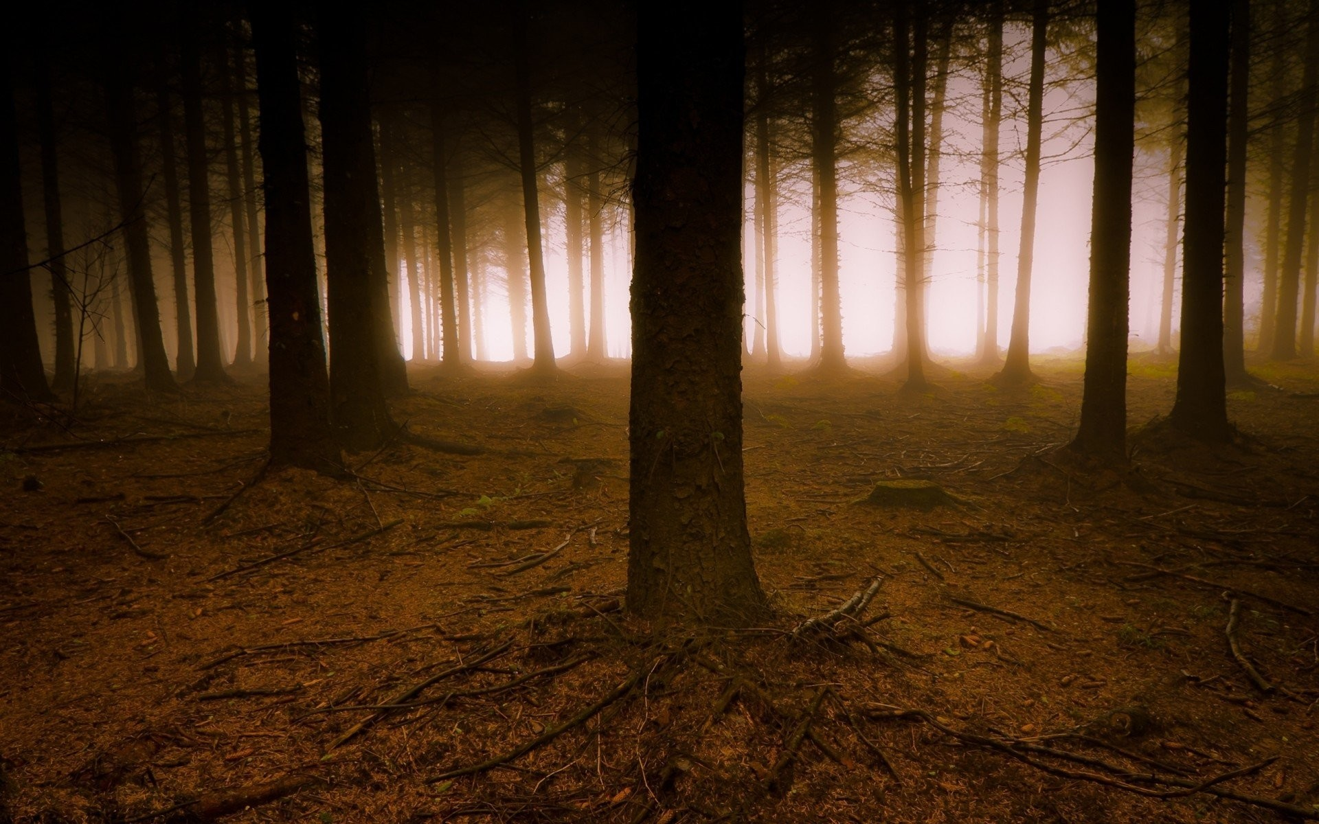 the roots tree fog forest haze branches creepy dark land