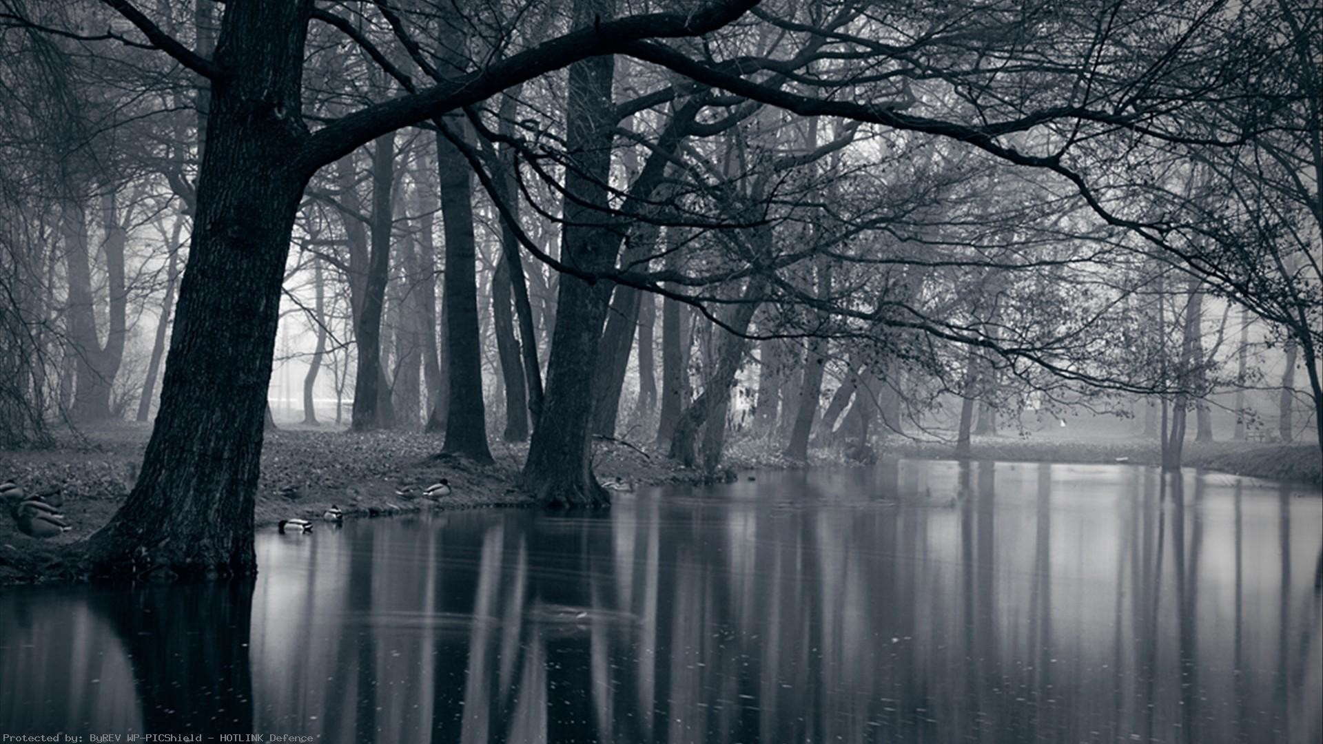 Dark-Forest-for-Home-WalOps-com-AND-it-