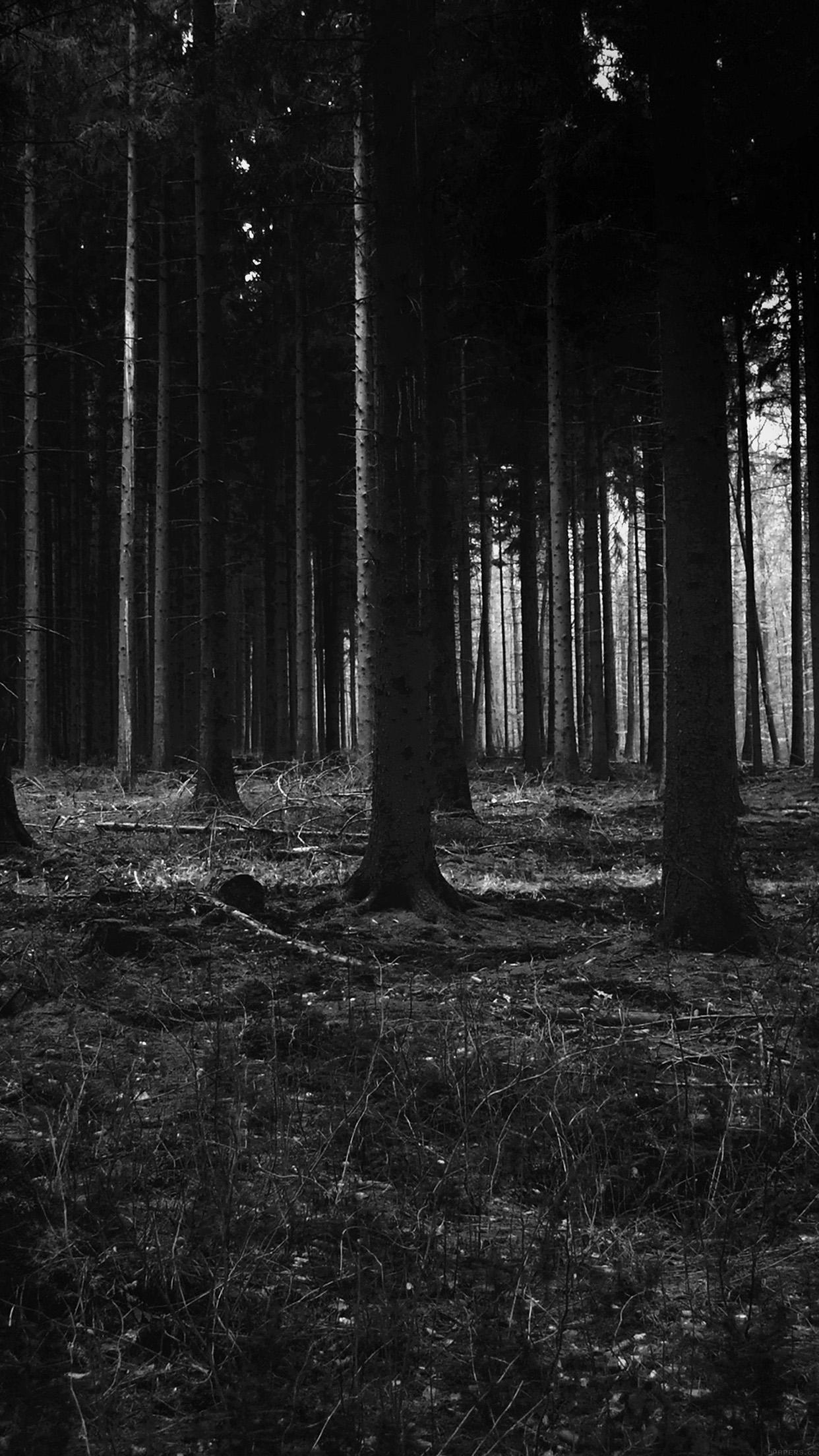 86_dark_forest.jpg (1132×800) | Creepy Forest | Pinterest .