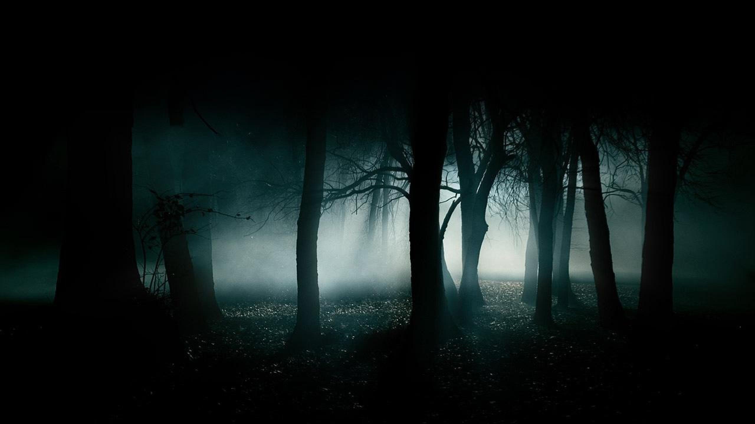 Dark-Forest-by-reizarchmn