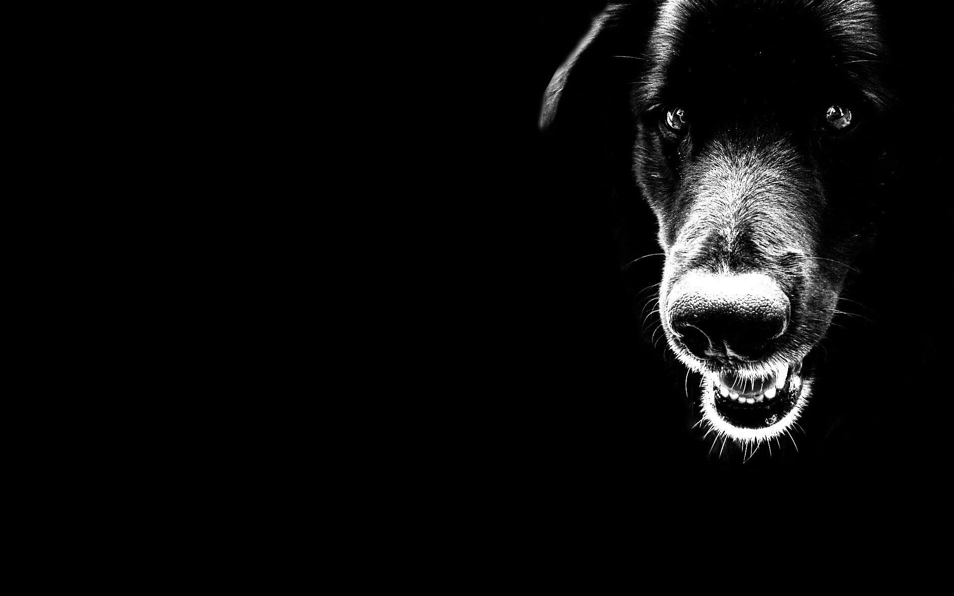 Scary Black Dog