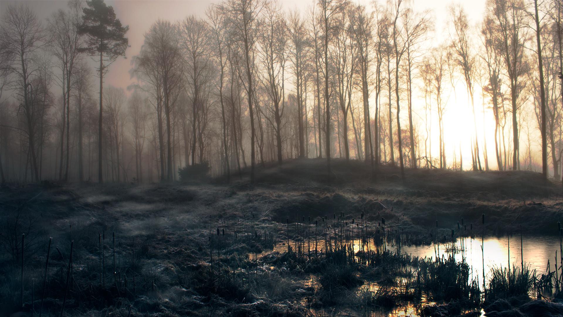 Forests Mist Slender Man Trees