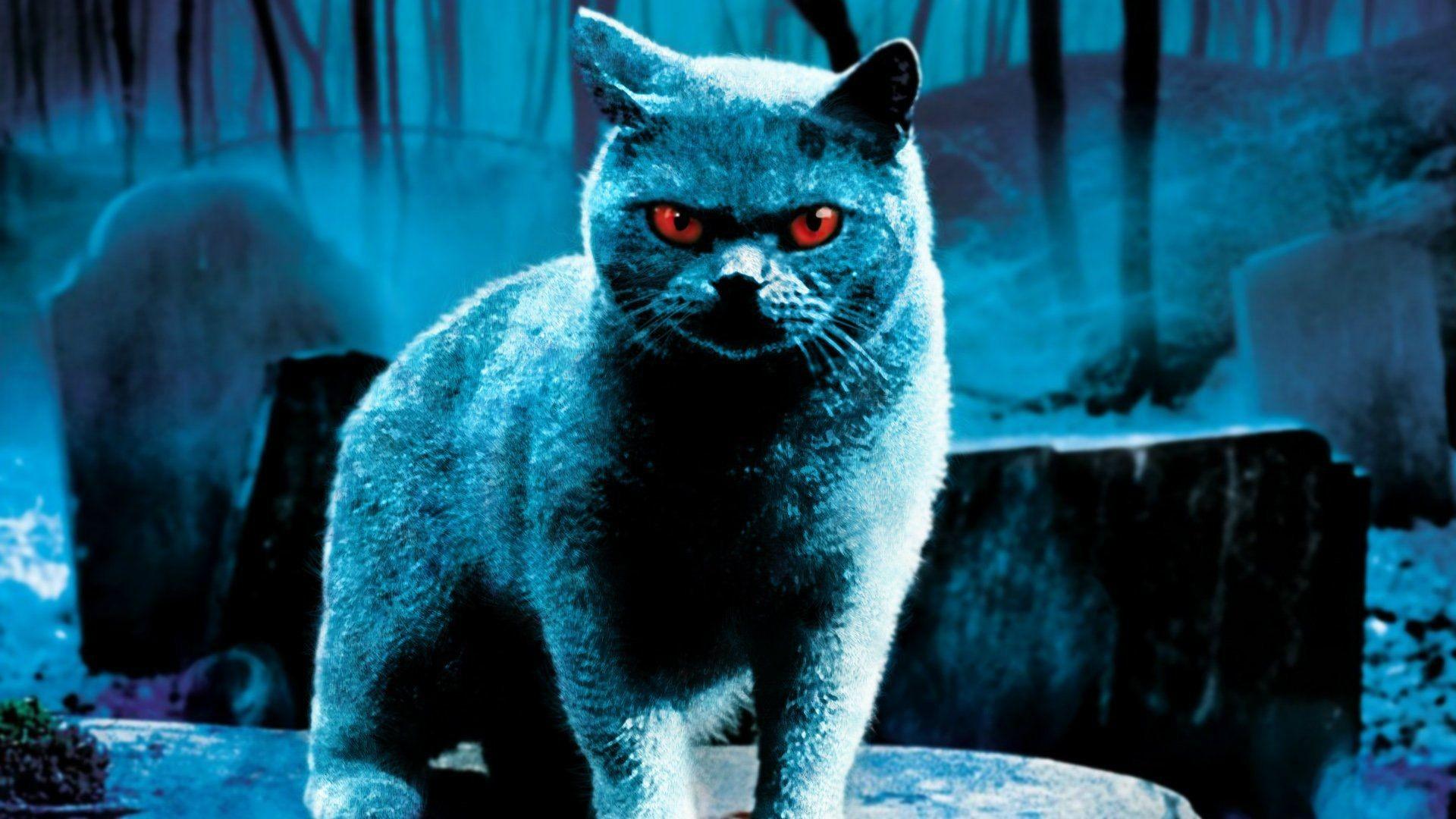 … Horror Cat Hd Wallpaper. Download