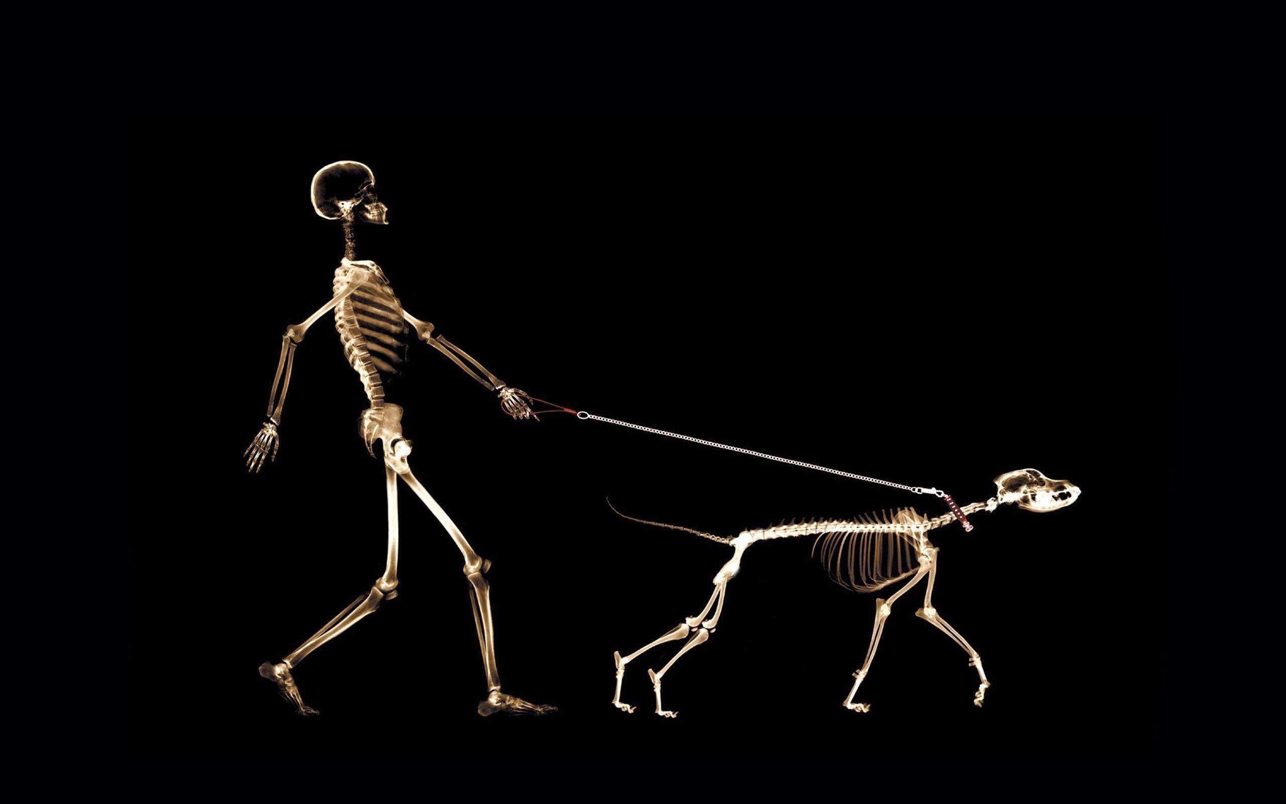Skeleton Wallpaper 9