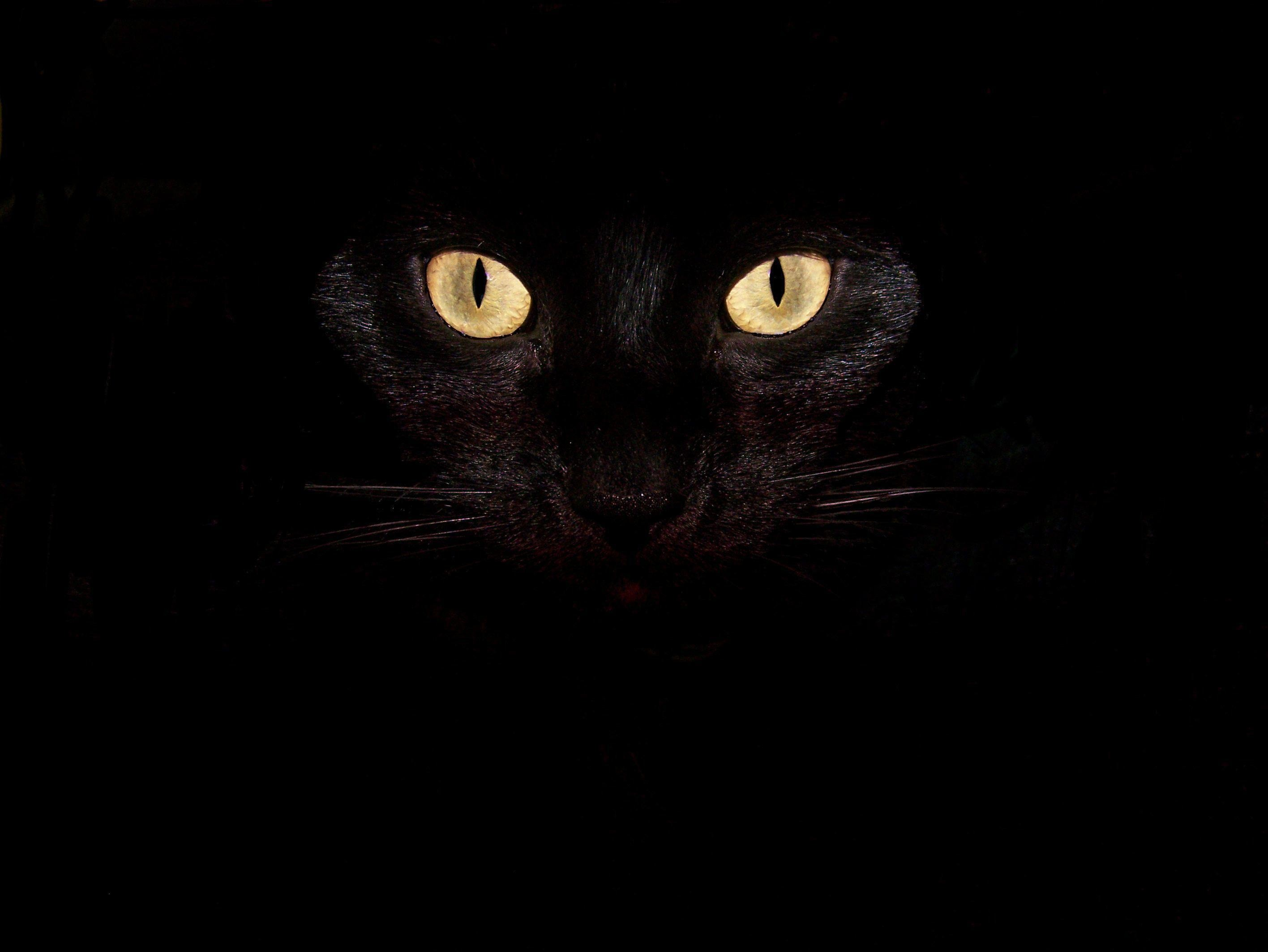 Celebration: Scary Halloween HD Wallpapers, halloween free desktop .
