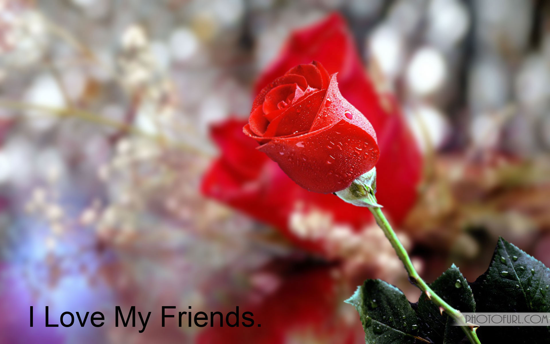 Friendship HD Wallpapers very attractive.I Love My Friends beautiful  Wallpapers.Download free .