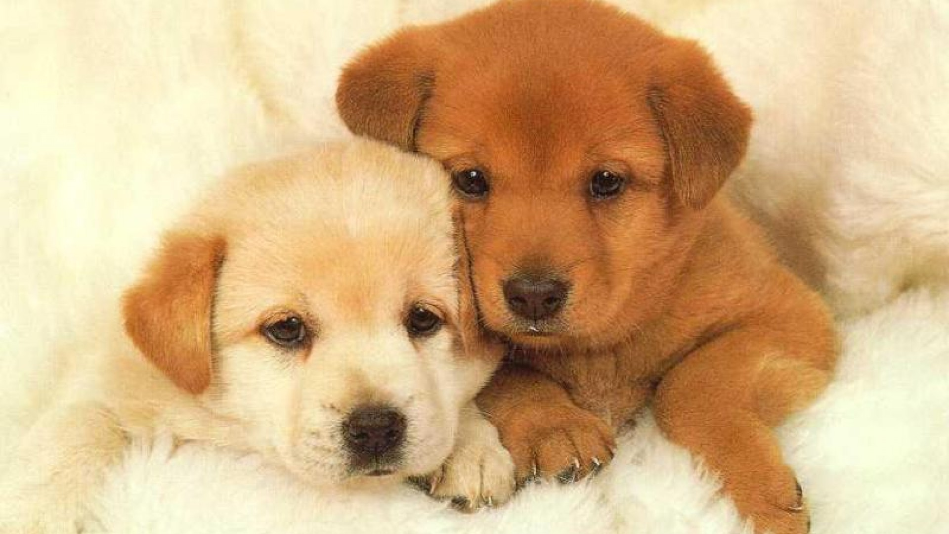 Image result for cute dogs wallpaper Dogs Pinterest | HD Wallpapers |  Pinterest | Dog wallpaper and Wallpaper