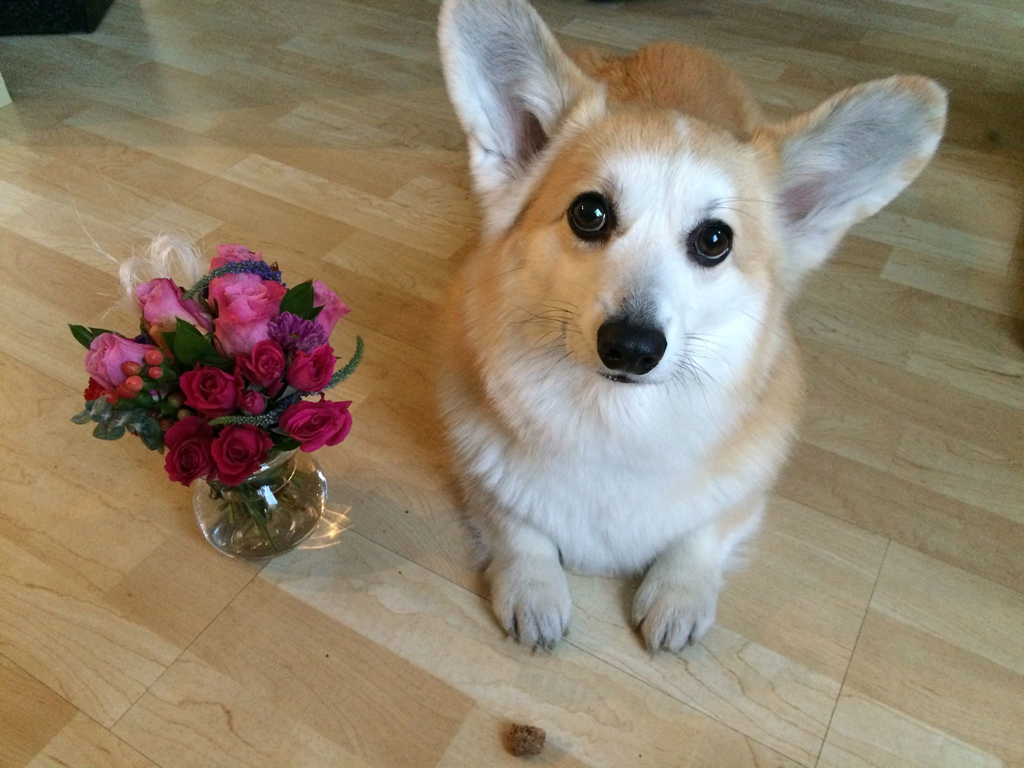 4 Last-Minute Ideas for Your Dog-Loving Valentine