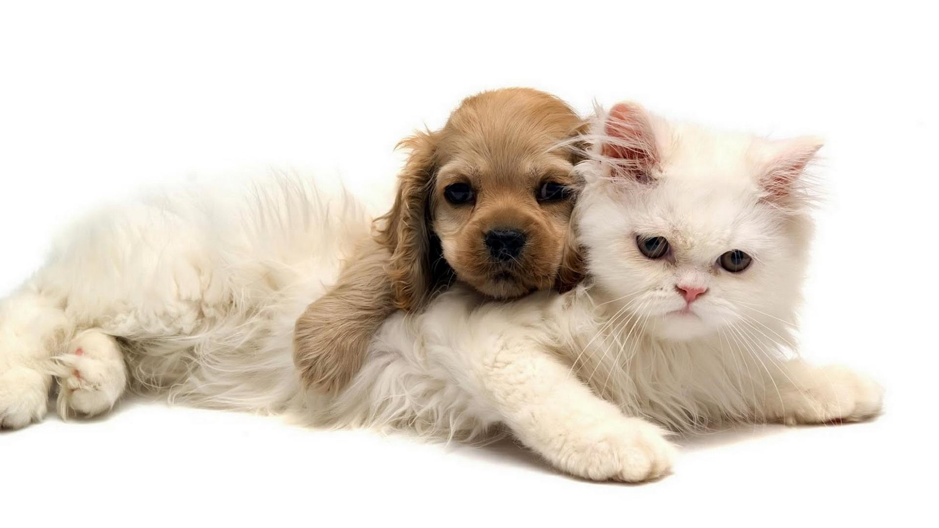 DOG AND CAT *** wallpaper thumb