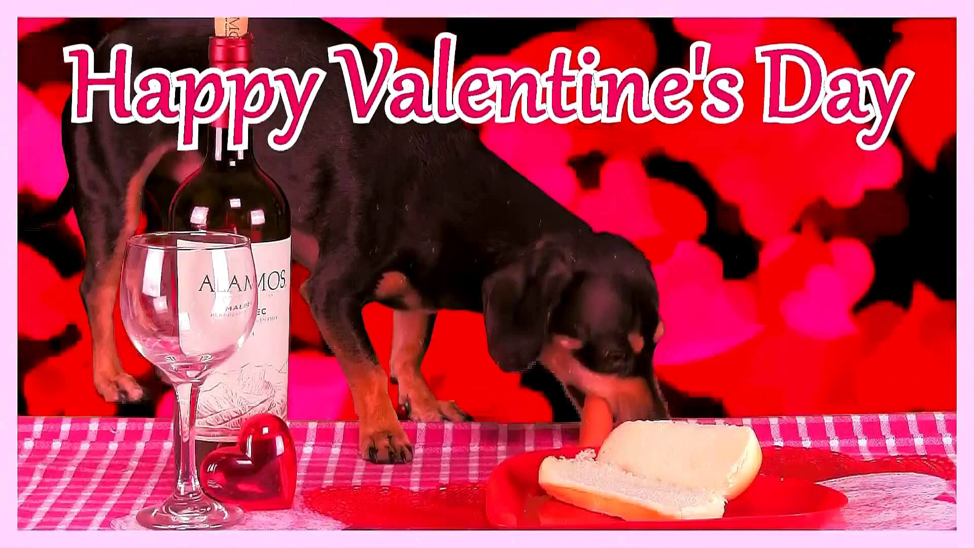 Happy Valentine's Day! Cute Puppy Eats a Hot Dog!