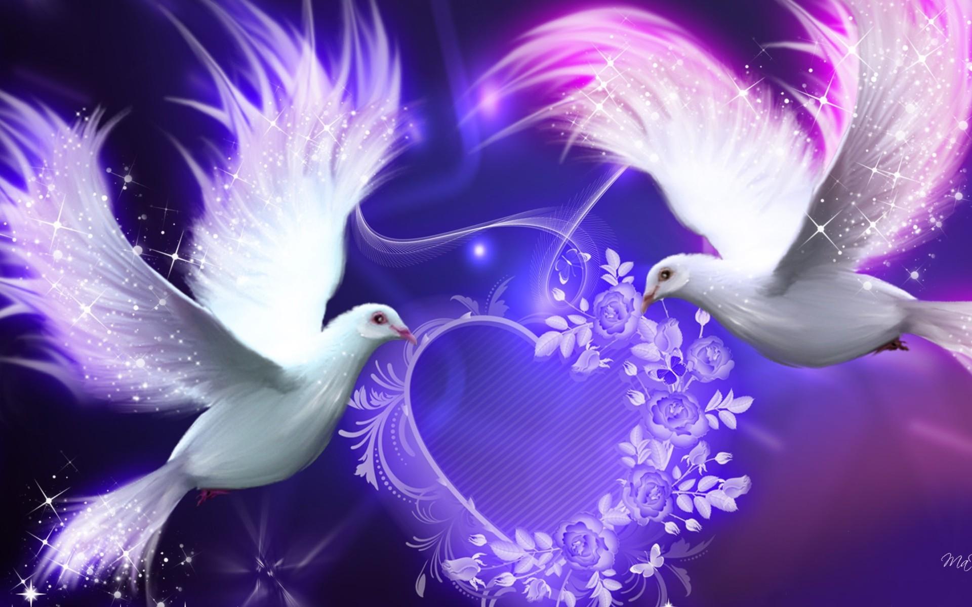 purple bird | lover Purple Doves,Birds hd wallpapers,Animal wallpapers#71