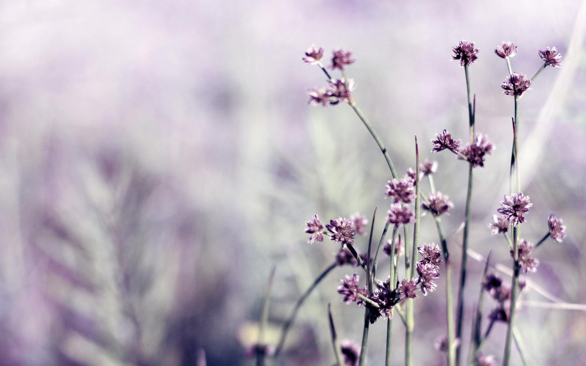 purple flowers wallpaper. Download …