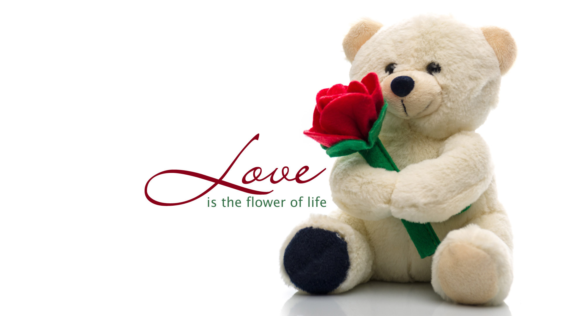 cute teddy bear love you with flowers hd wallpapers
