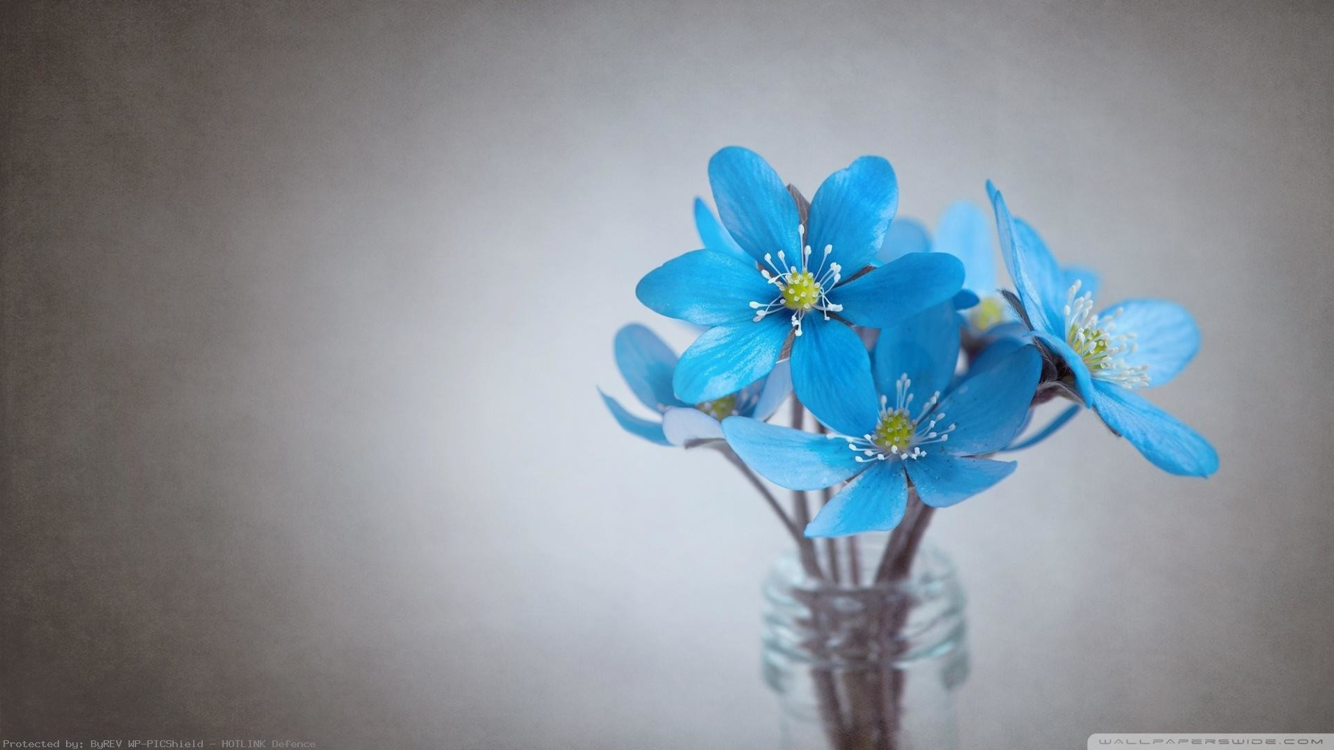 Cute-Love-Full-HD-Download-Desktop-Mobile-Backgrounds-