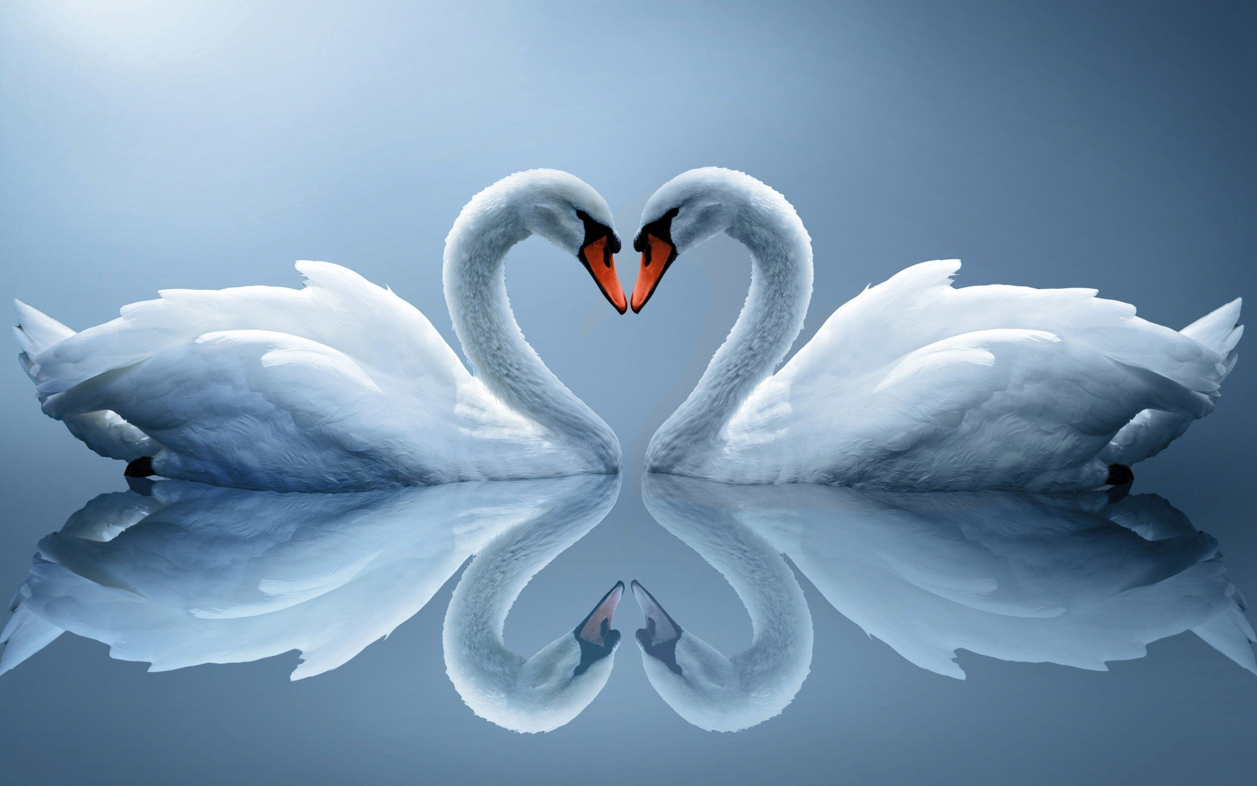 Finger Heart Cute Love Couple Wallpaper Free Download