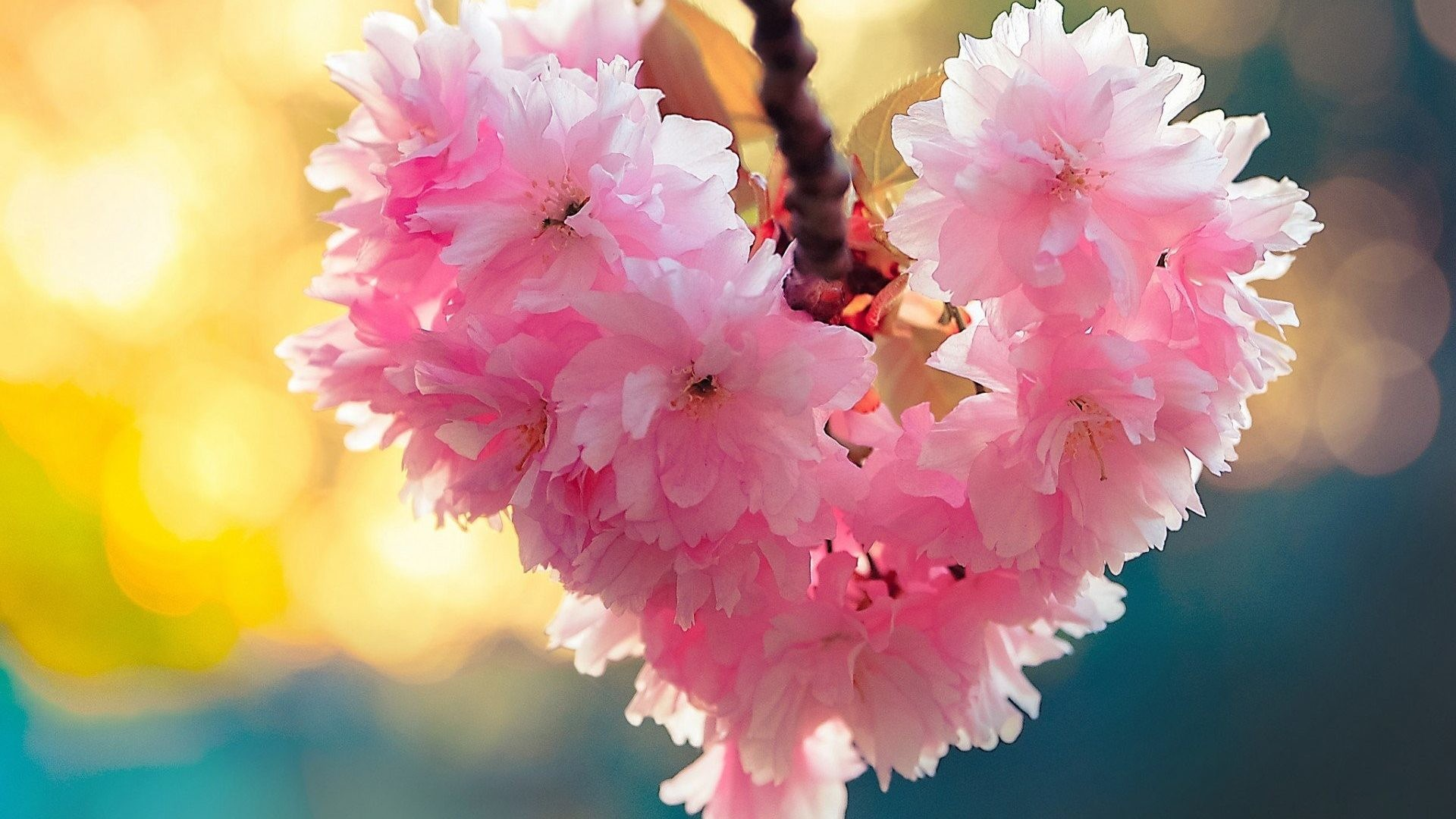 Flowers Spring Nature Love Heart Bloom Android Hd Wallpapers Free Download  – 1920×1200