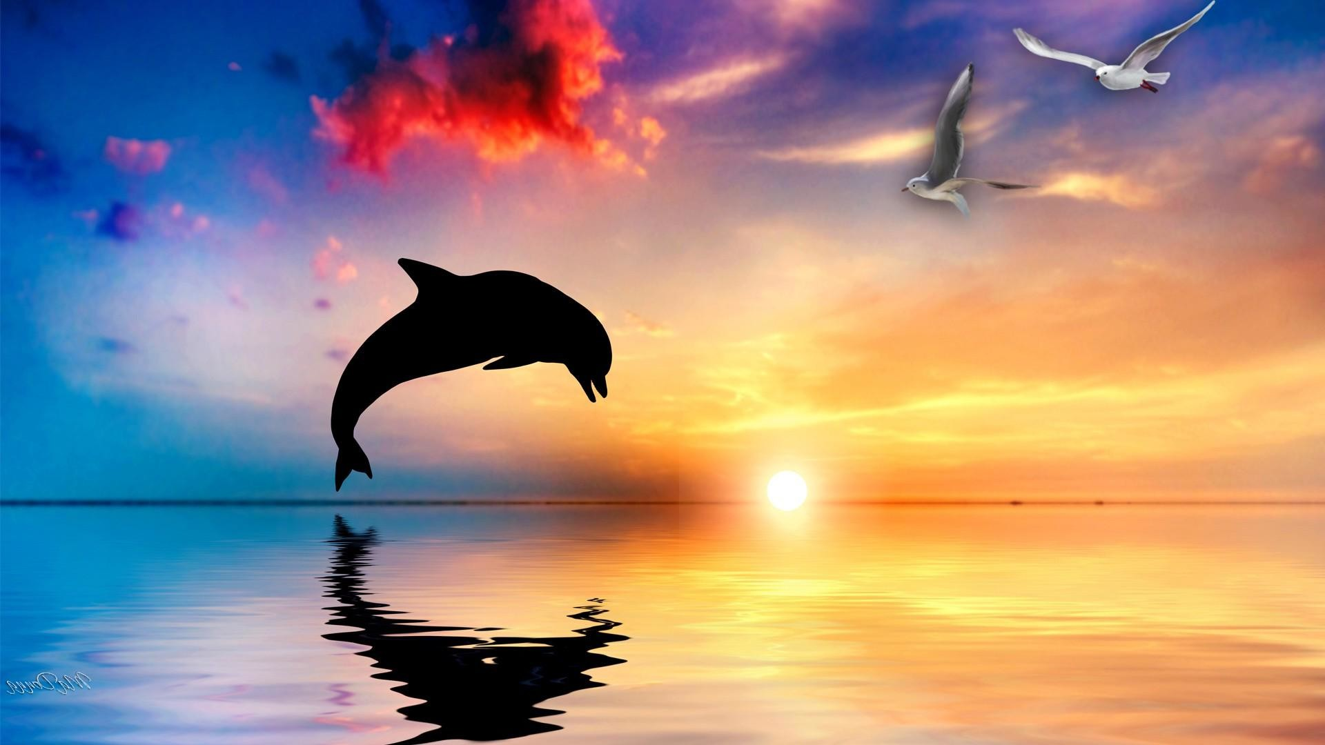 Dolphin HD Wallpapers and Backgrounds   HD Wallpapers   Pinterest    Wallpaper, Hd wallpaper and Wallpaper backgrounds