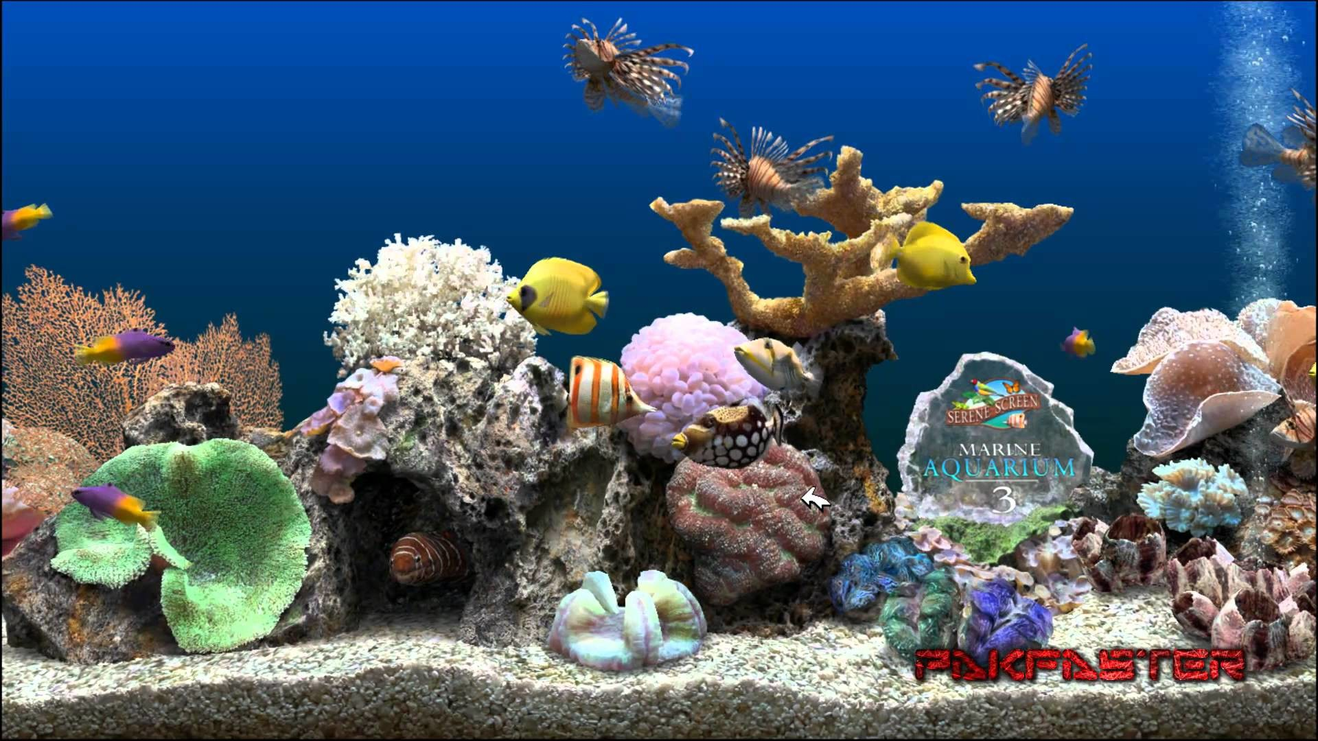 Animated Aquarium Desktop Wallpaper Windows : Usmc wallpapers and  screensavers wallpapersafari