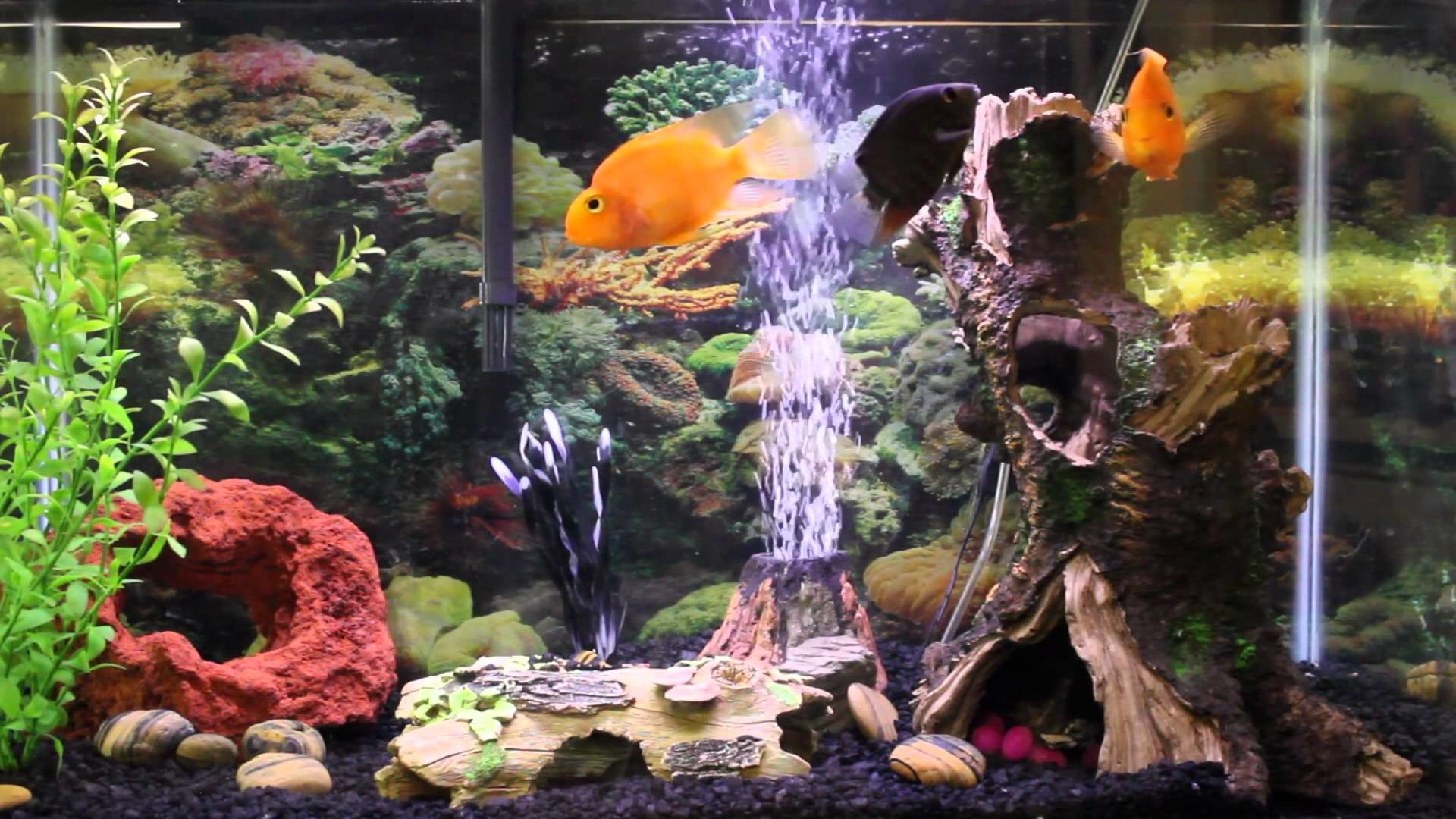Full Size of Fish Tank 1hr Relaxing Music Aquarium Screensaver Fishtank Hd  Youtube Download Torrent Microsoft …