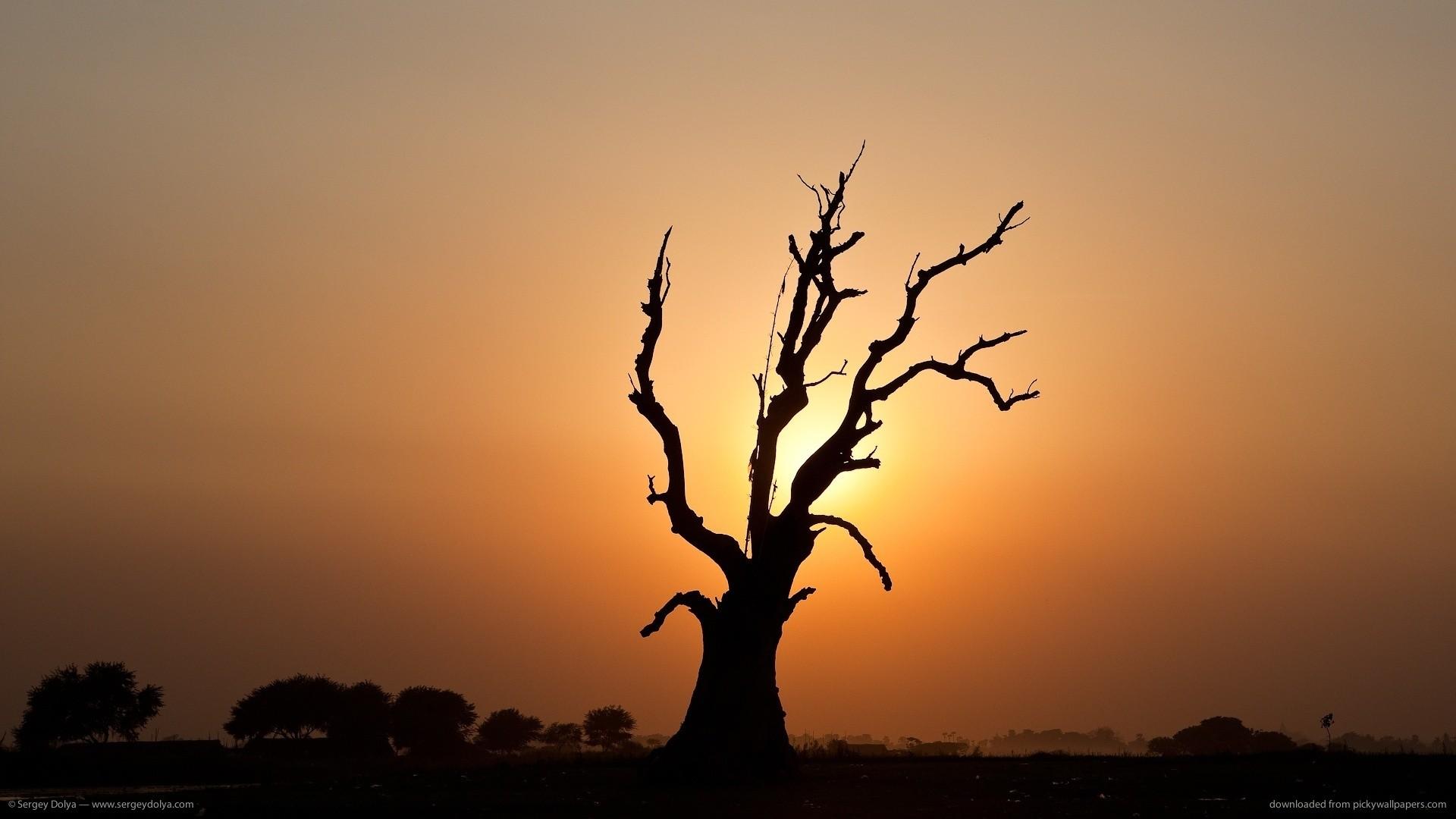 Evil dead tree for 1920×1080