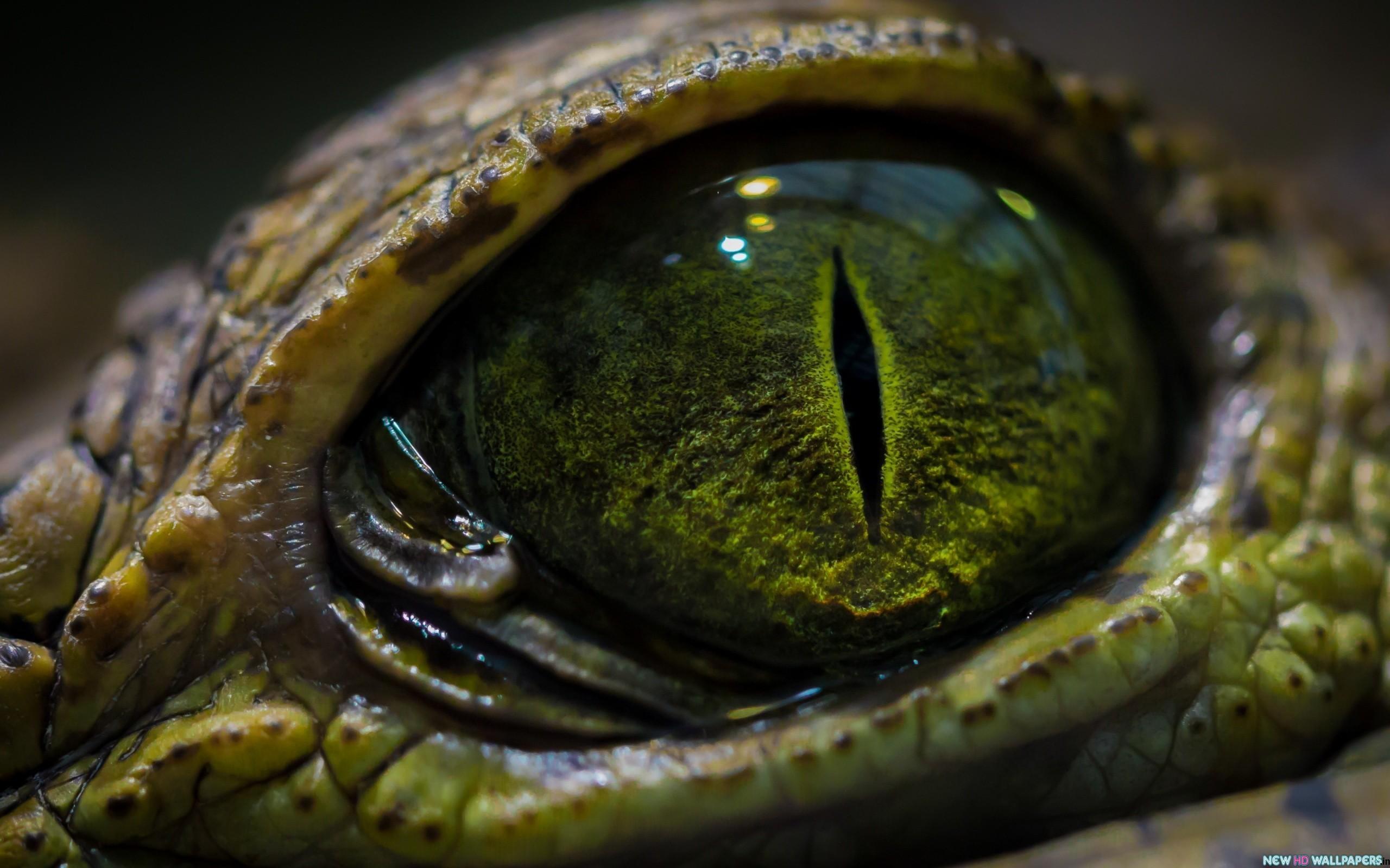 Snake Eyes Wallpaper hd Snake Eye Animal hd Wallpaper