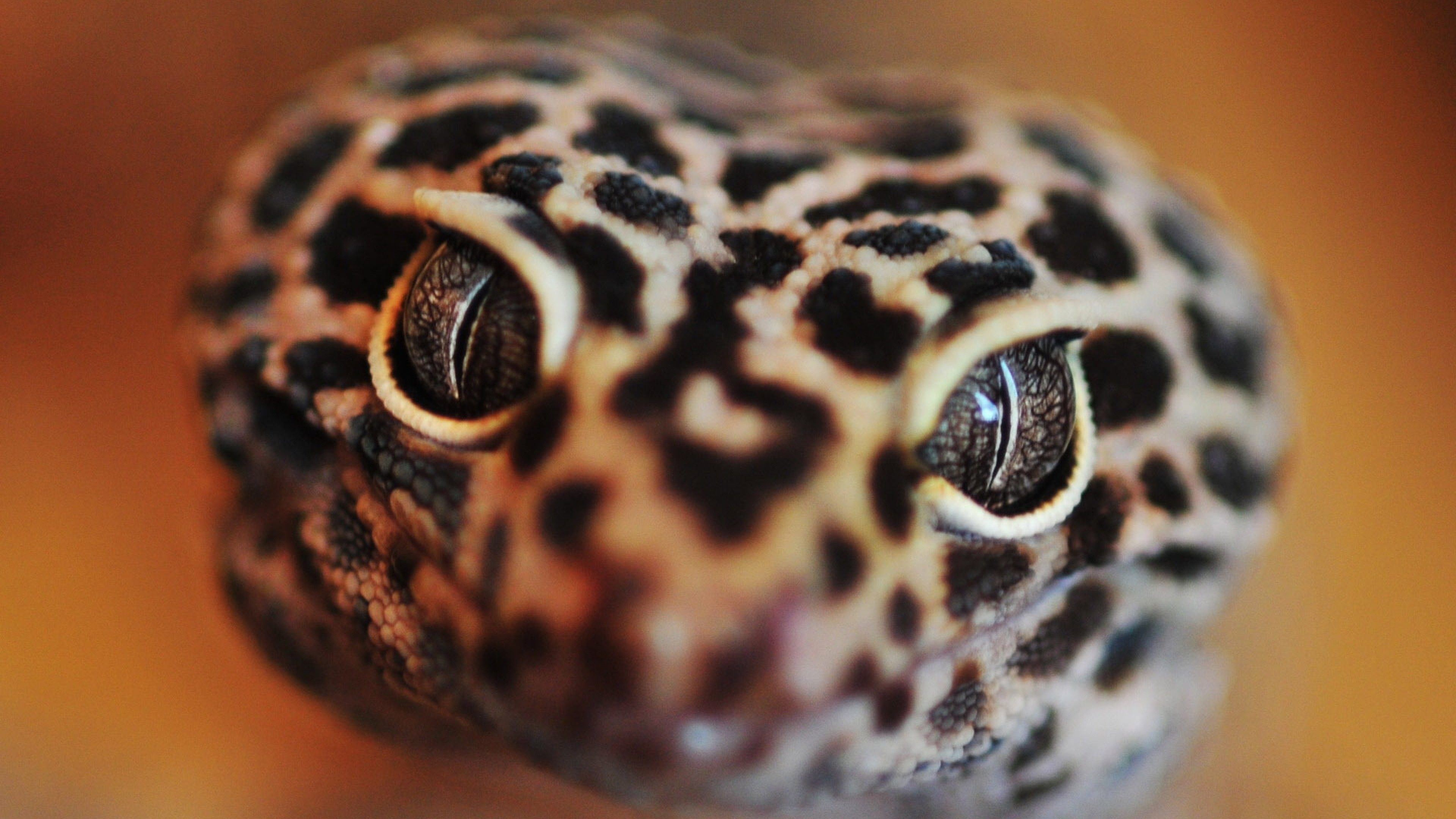 Wallpaper snake, eyes, face, color