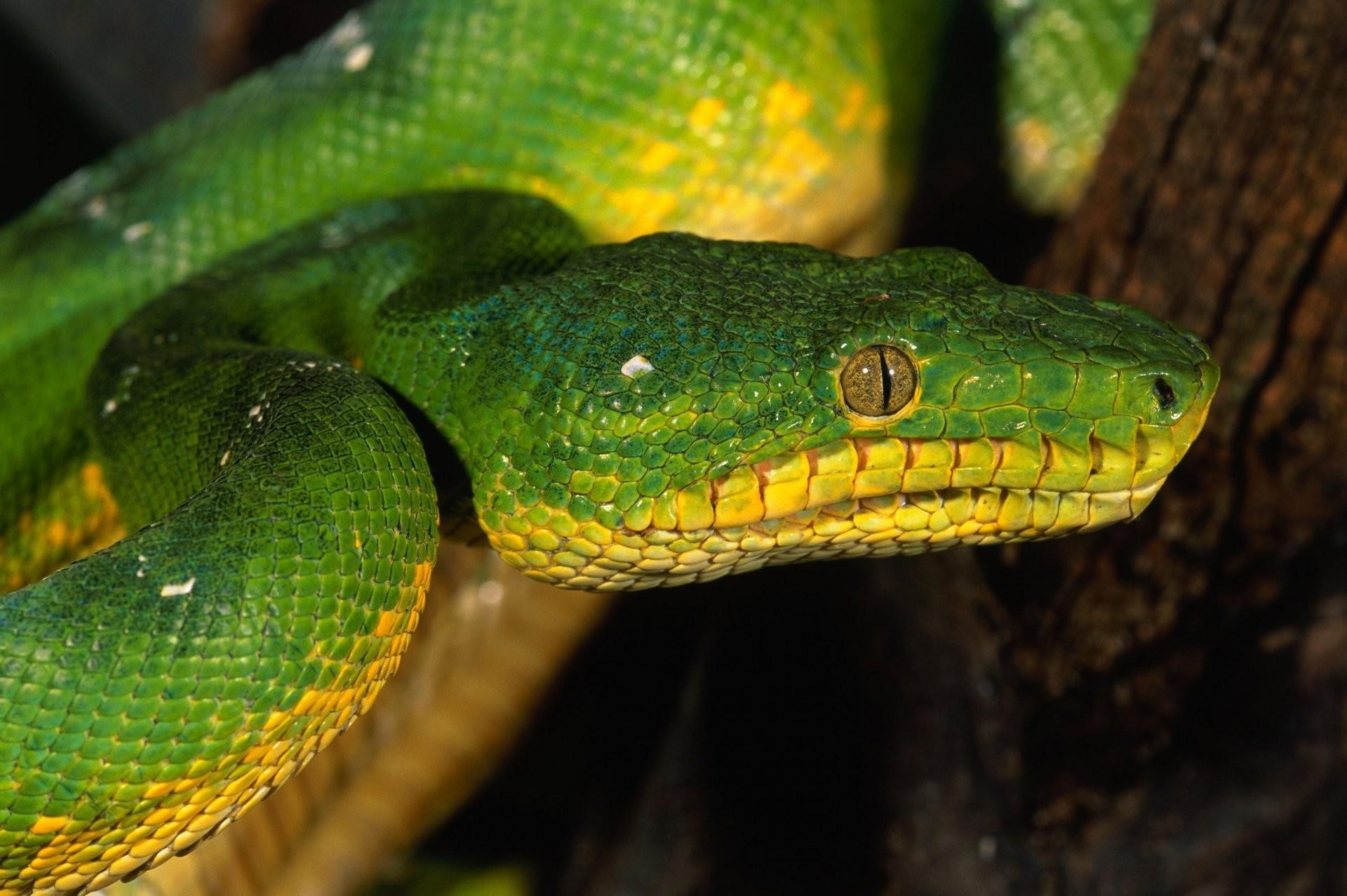green snake eyes scales