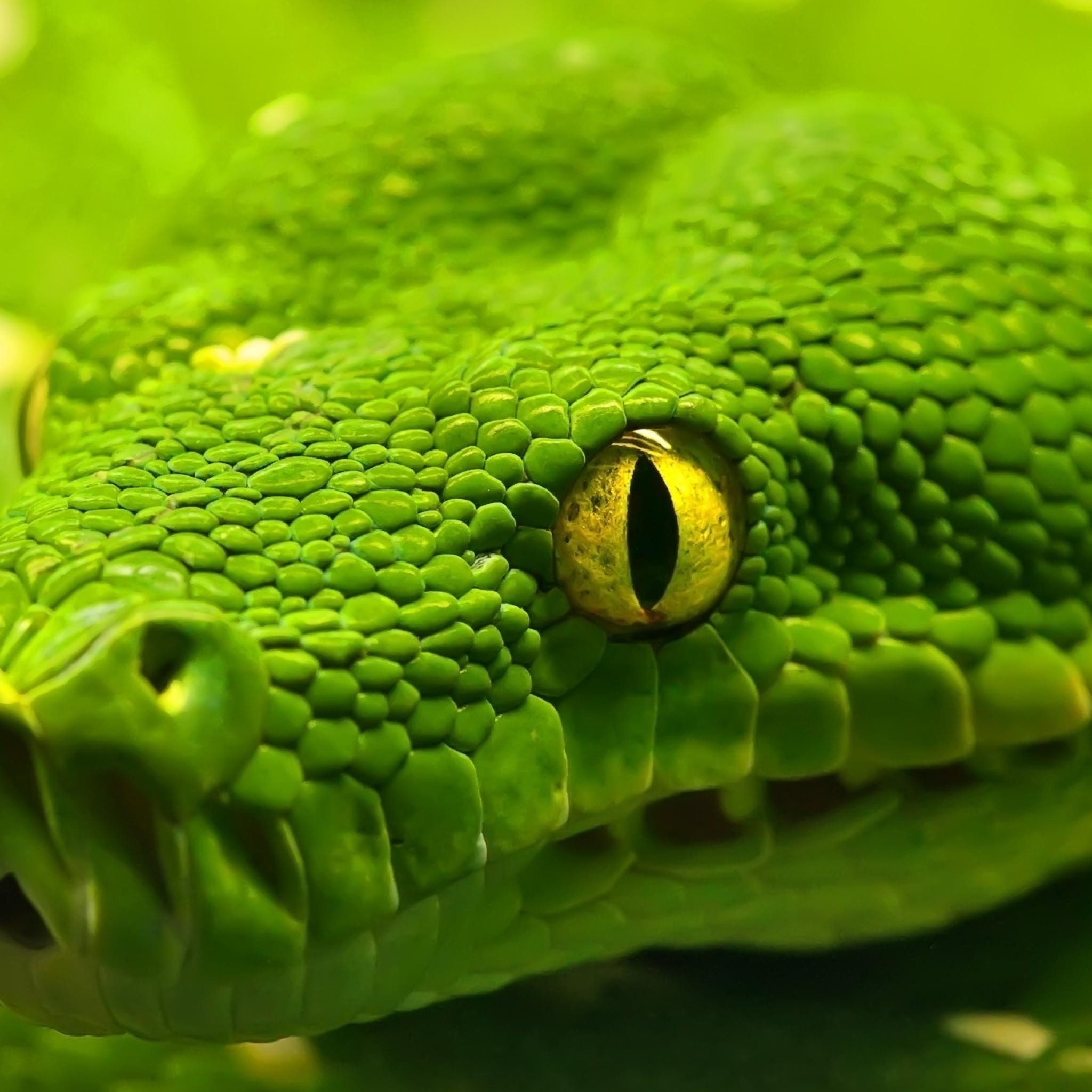 Wallpaper snake, head, eyes, color