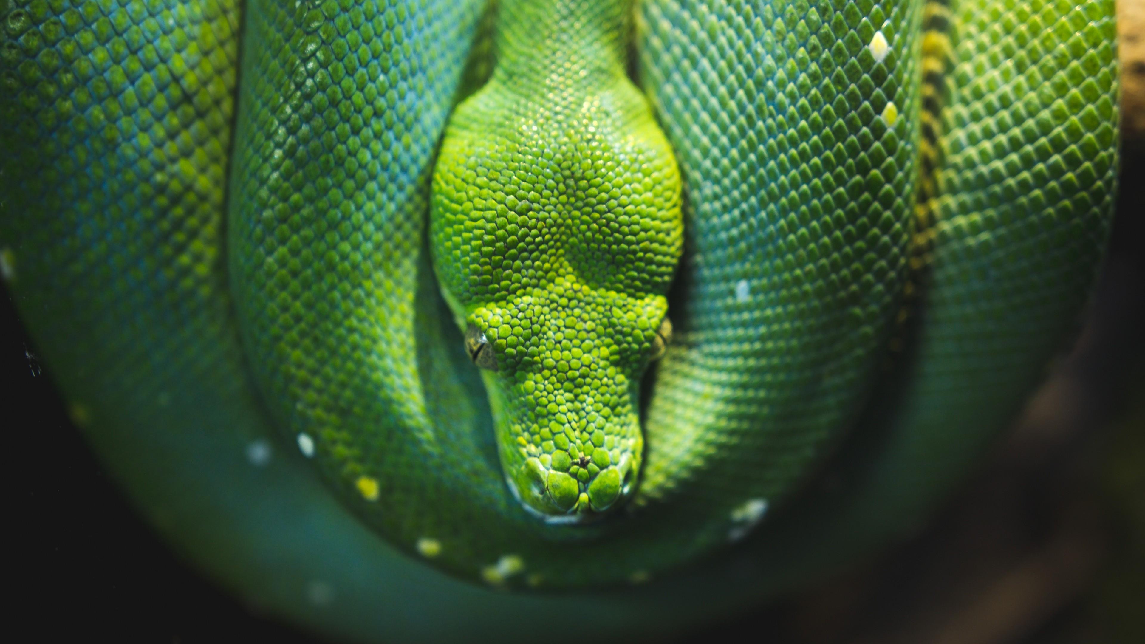Preview wallpaper snake, reptile, wildlife 3840×2160