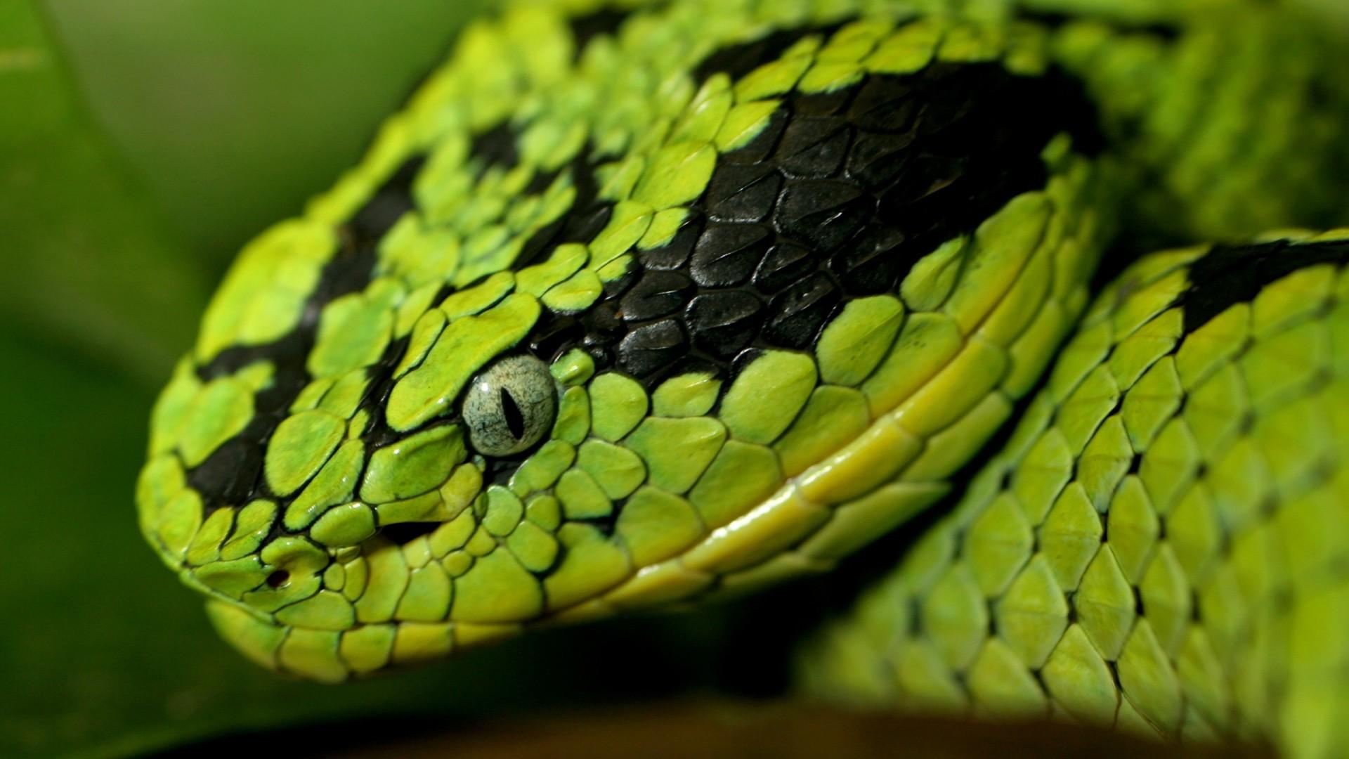 snake, face, eyes
