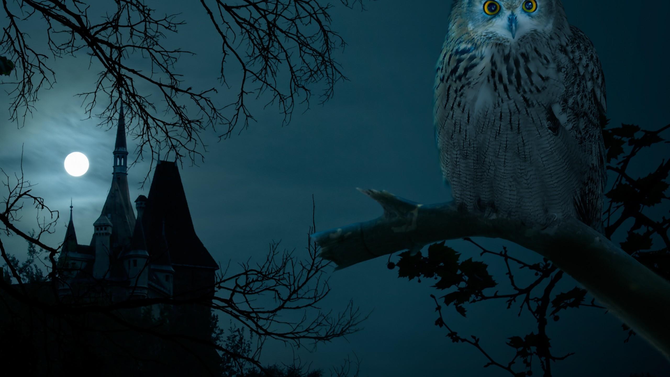 Night Owls Movie Wallpapers | WallpapersIn4k.net. Night Owls Movie  Wallpapers WallpapersIn4k Net