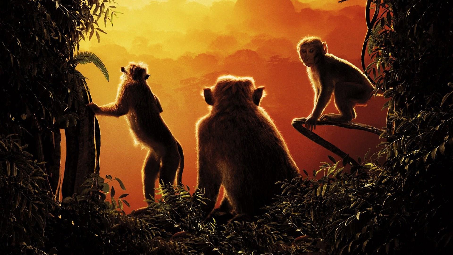 free high resolution wallpaper monkey kingdom, (426 kB)