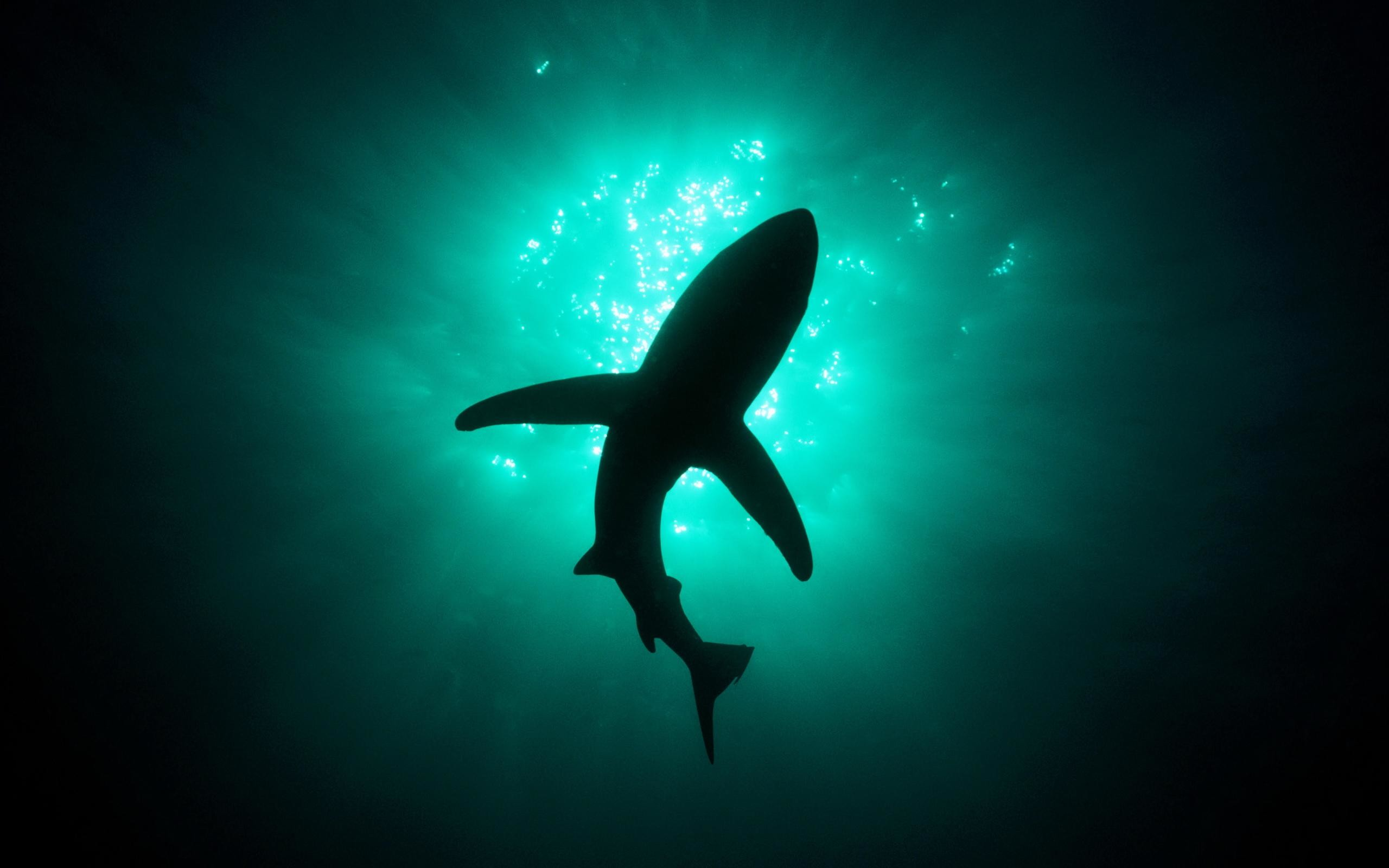 Hd-Shark-Wallpapers