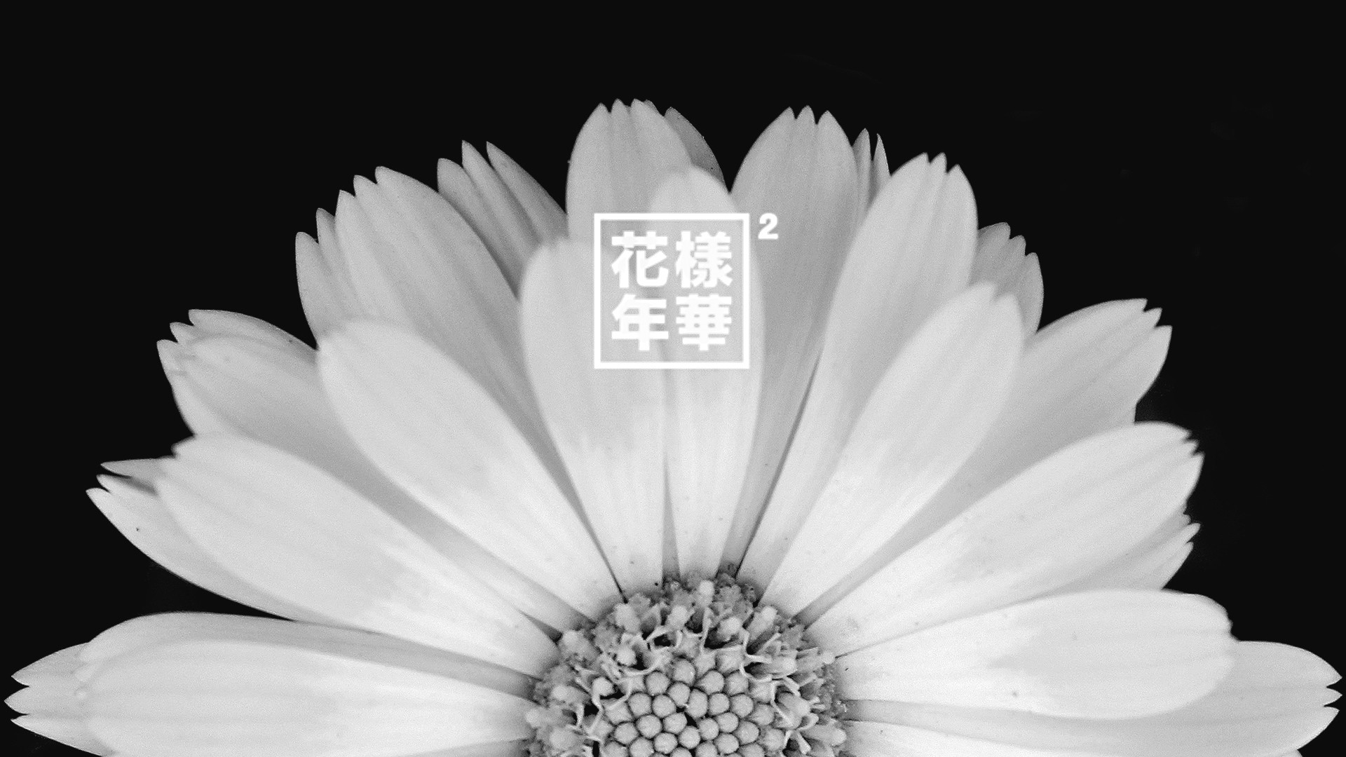 I made some simple 화양연화 pt.2 wallpapers, enjoy!