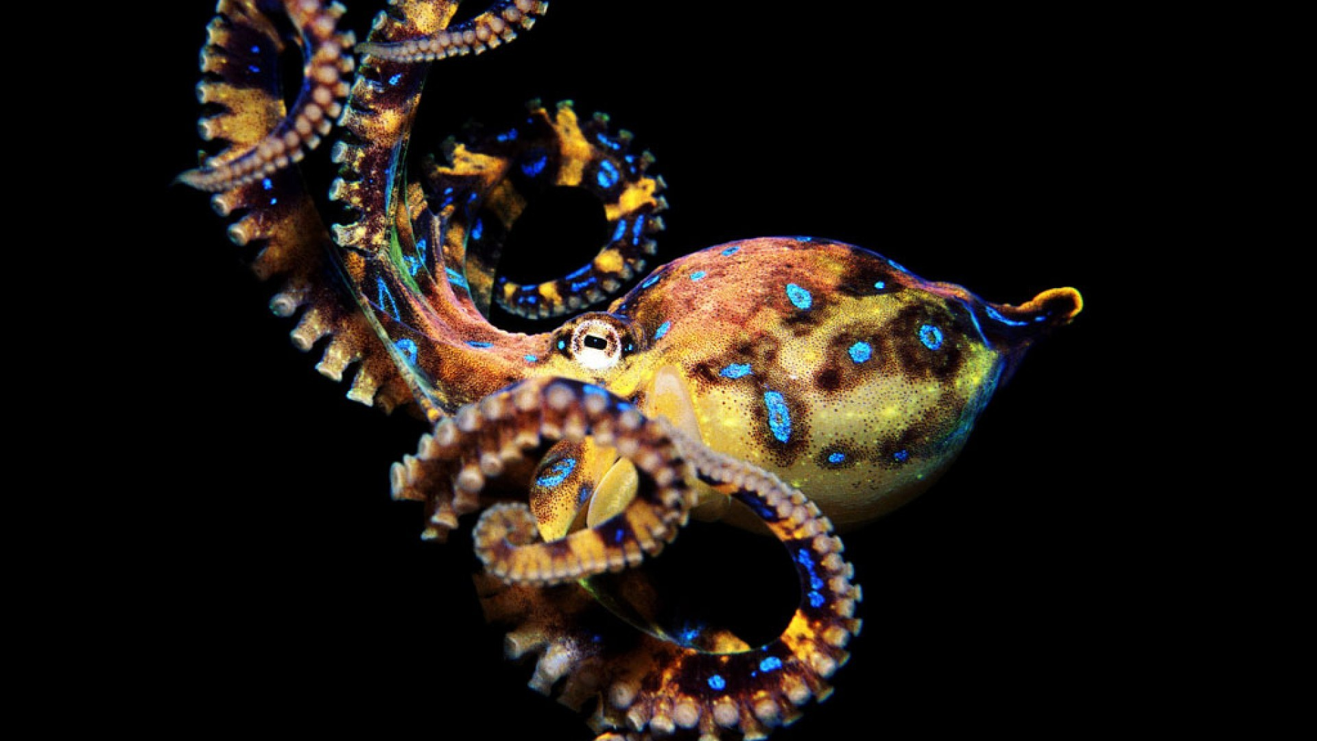 Octopus HD Wallpapers 1080p – HD Wallpapers Inn