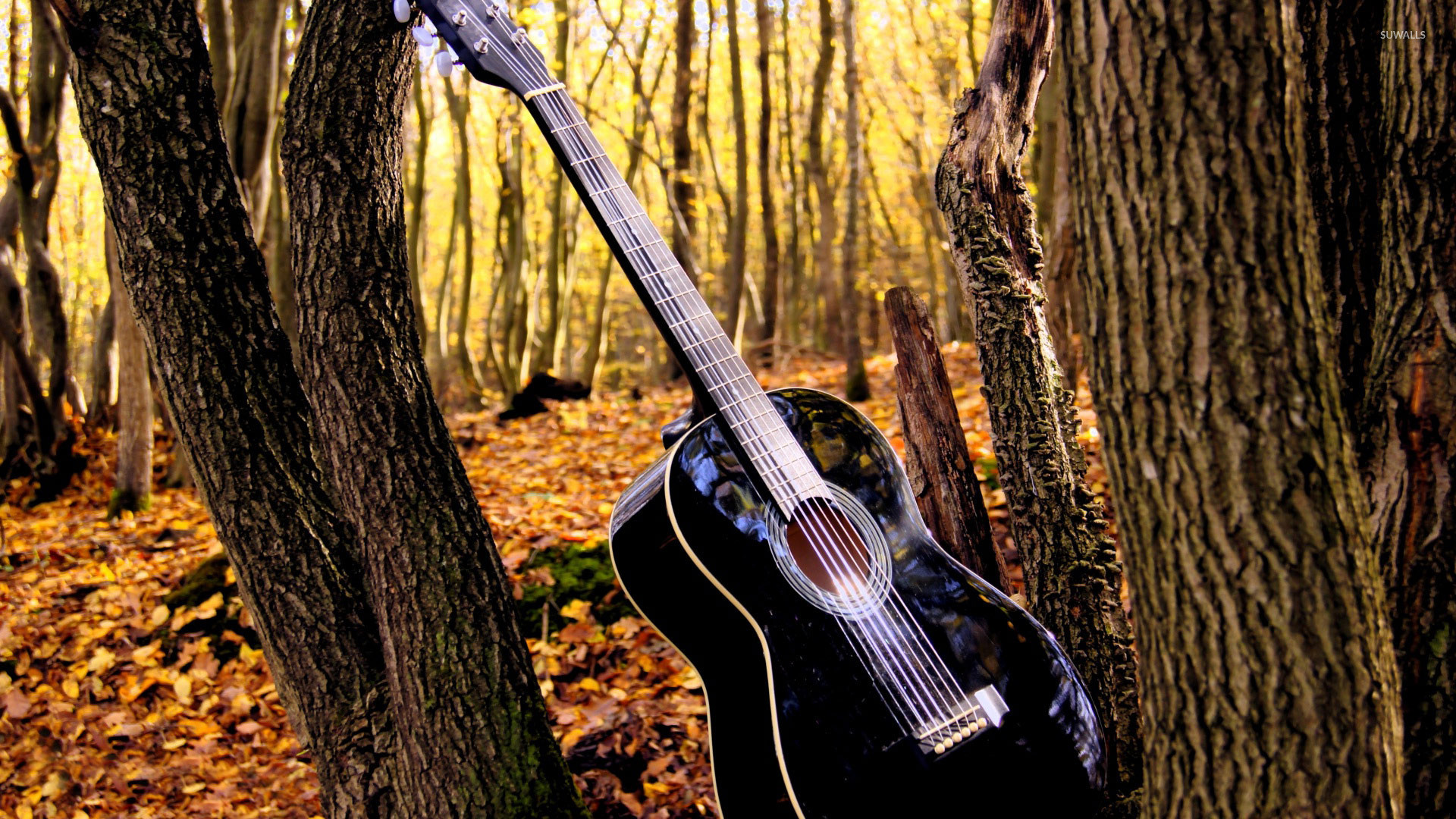 Cool Country Guitar Wallpaper In The Forest Pictures